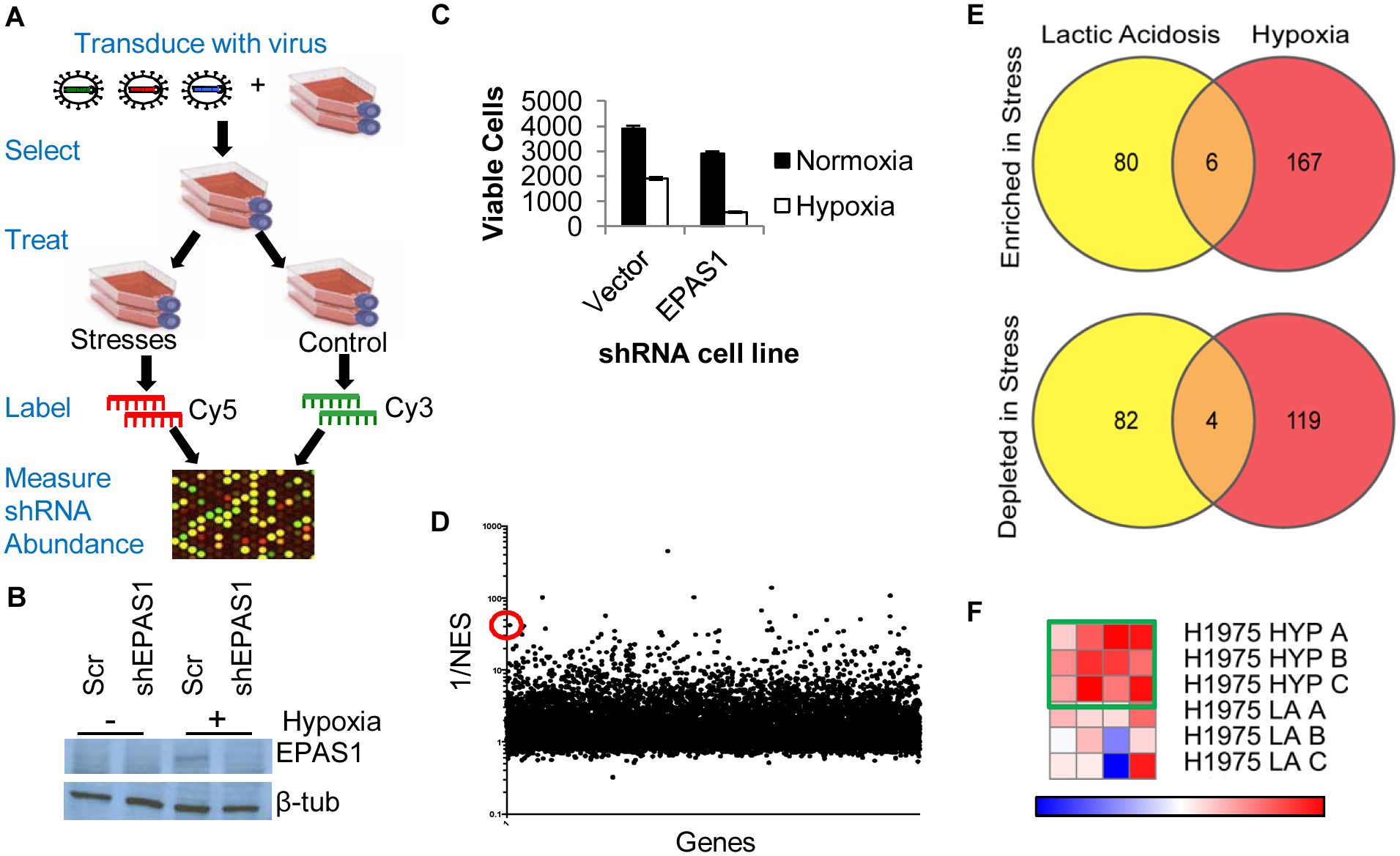 Genome-wide shRNA screen identifies the depletion of ACC1 as protective for cells under hypoxia.