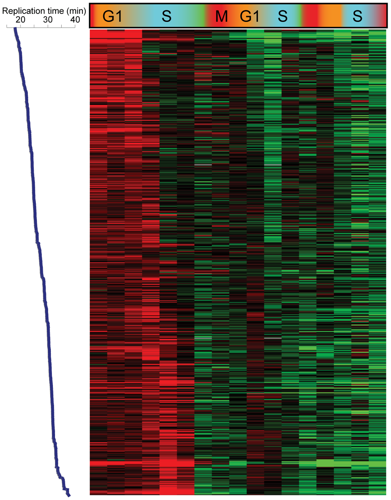 Replication-related loss of H3K4me3.