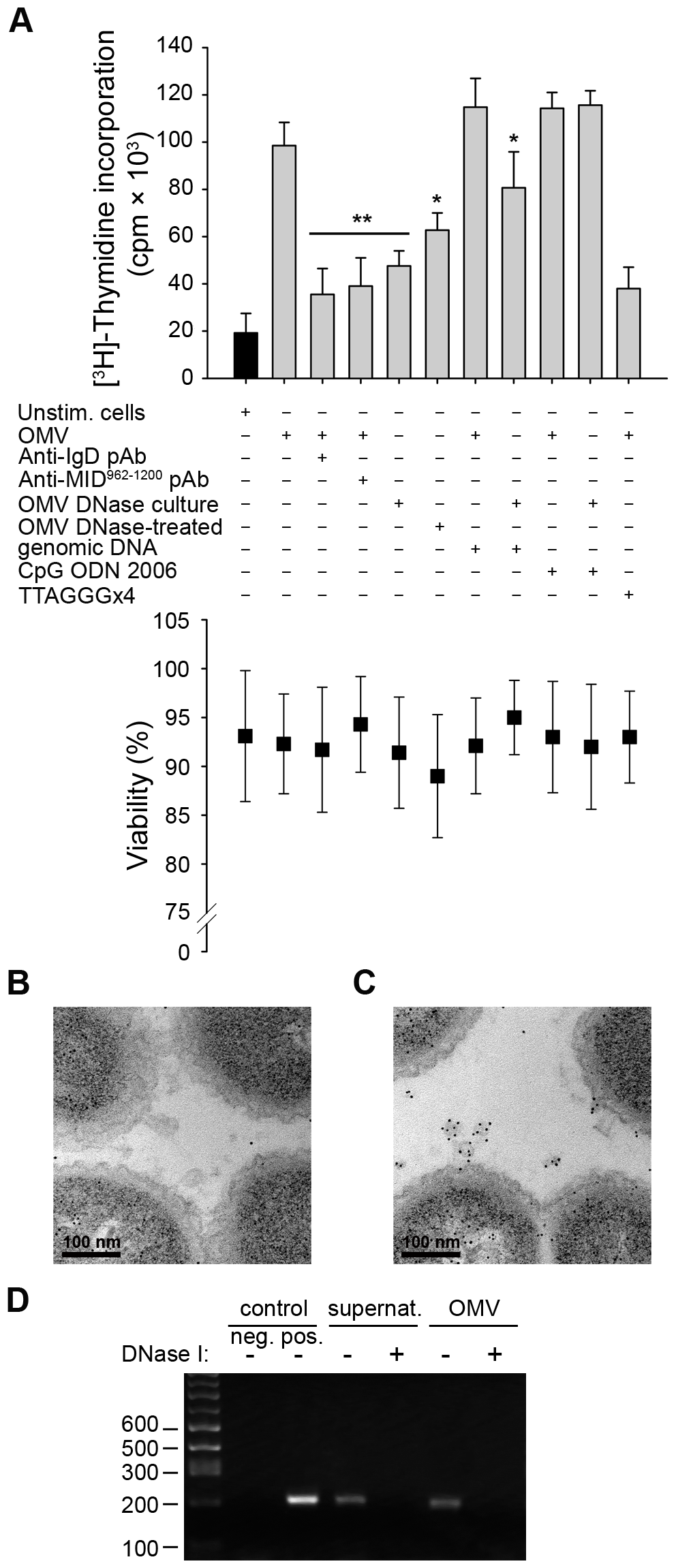 TLR9 participates in OMV-dependent B cell activation.