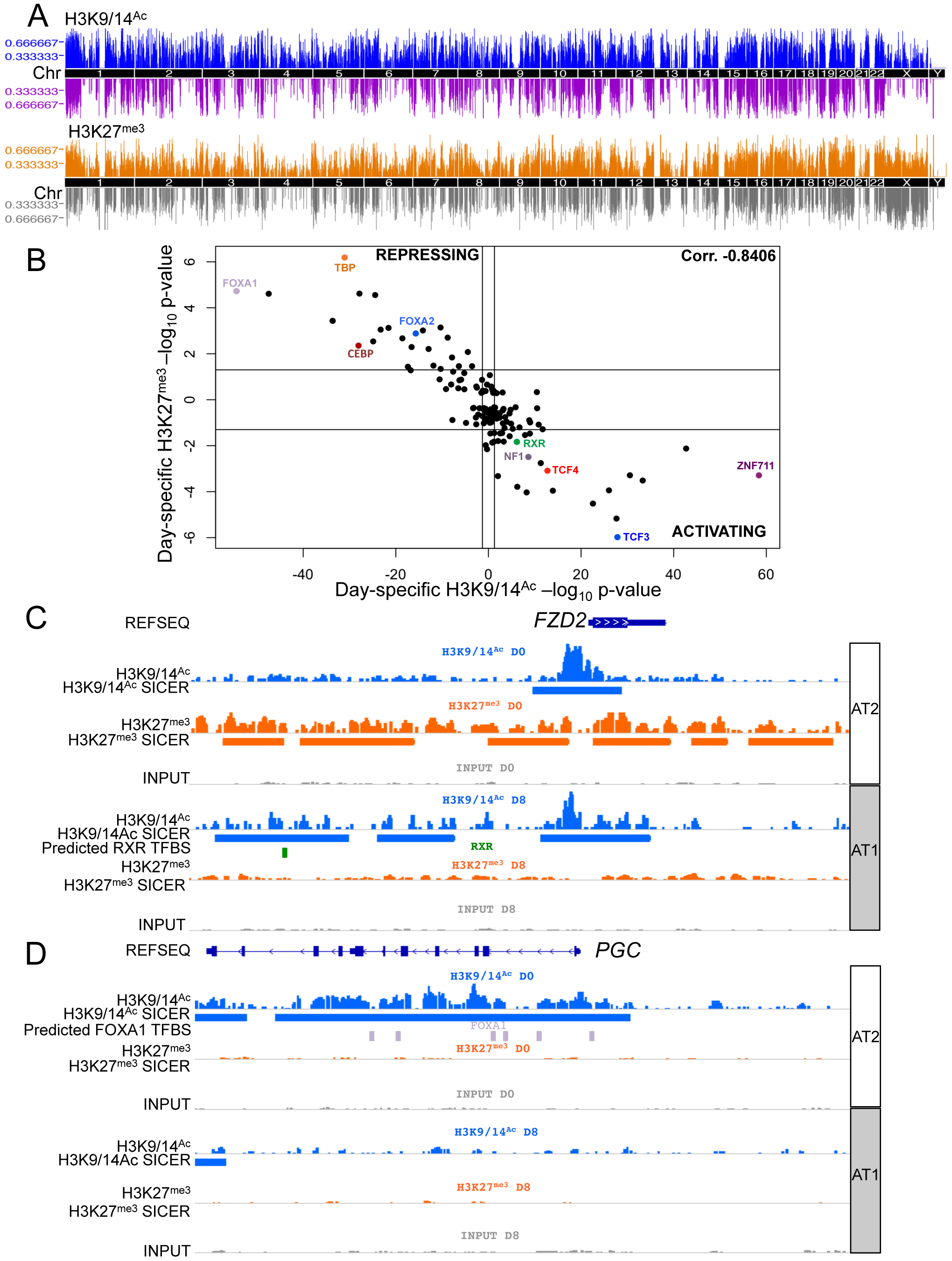 Chromatin changes during AEC differentiation.