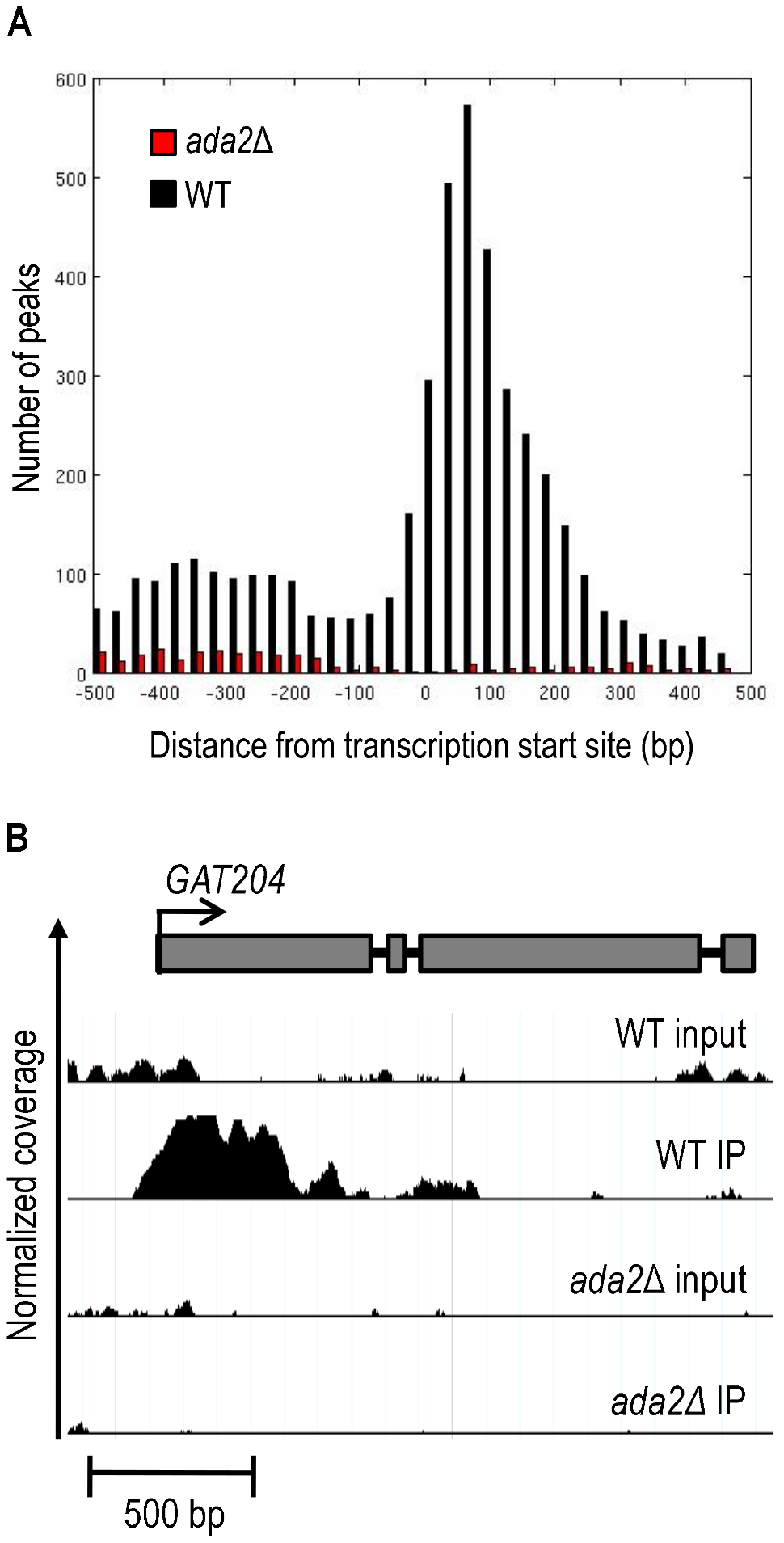 Ada2-dependent acetylation of H3K9 is enriched near gene transcription start sites.