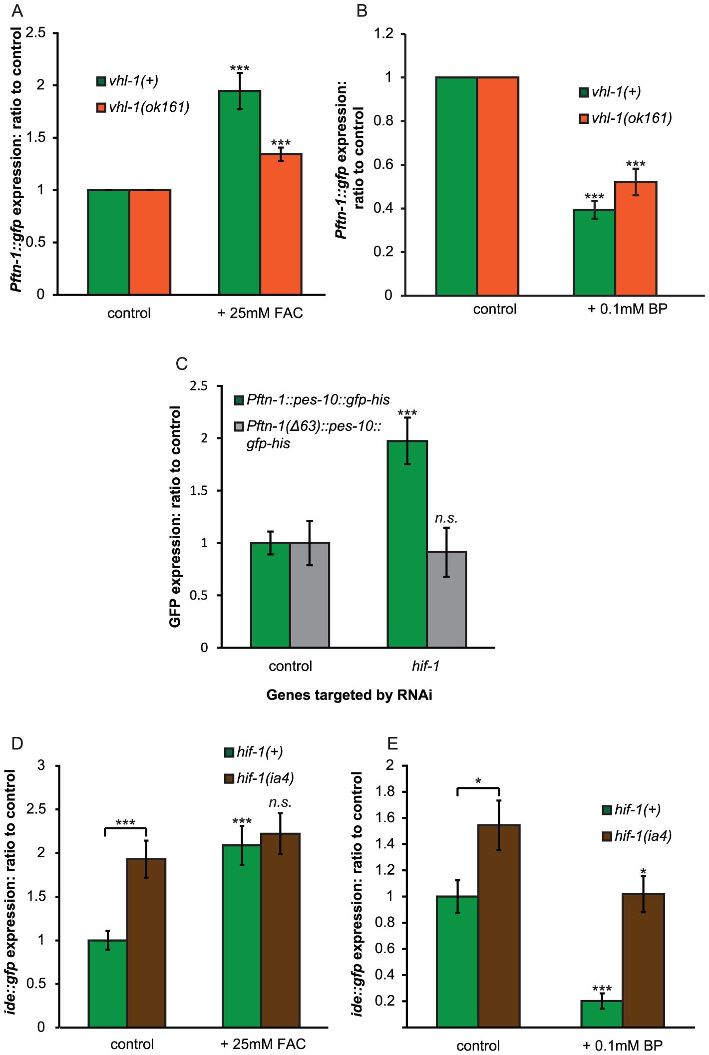 HIF-1 represses expression via the iron-dependent element (IDE).