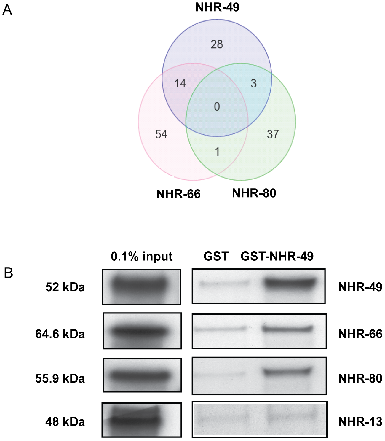 NHR-49 shares target genes and physically interacts with NHR-66 and NHR-80.