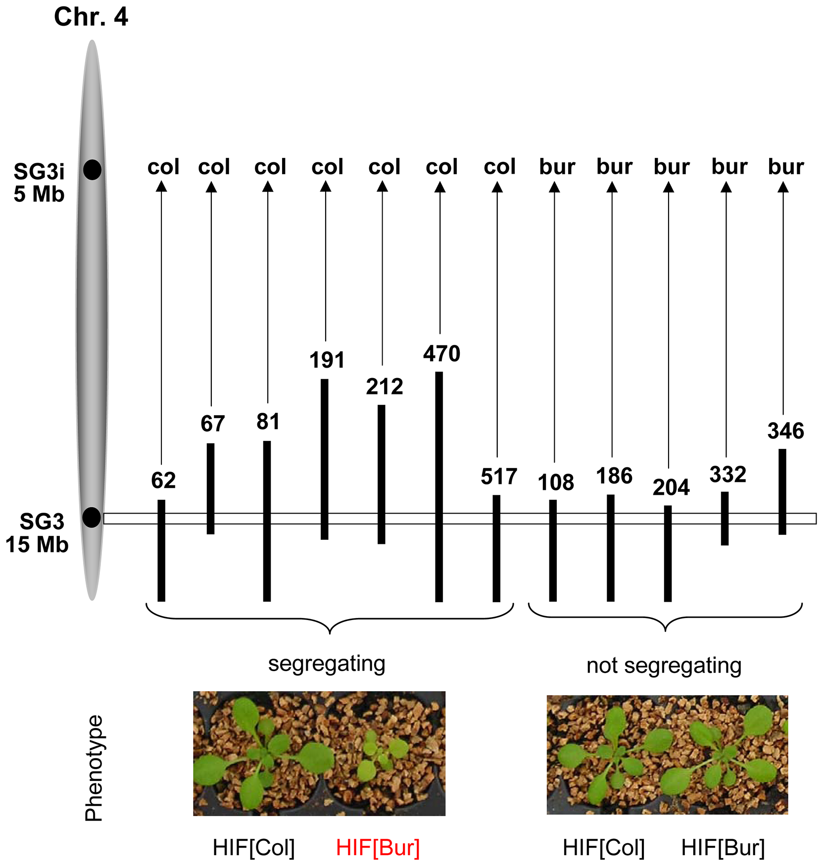 Confirmation of the phenotypic effect of SG3 and its interaction with SG3i.