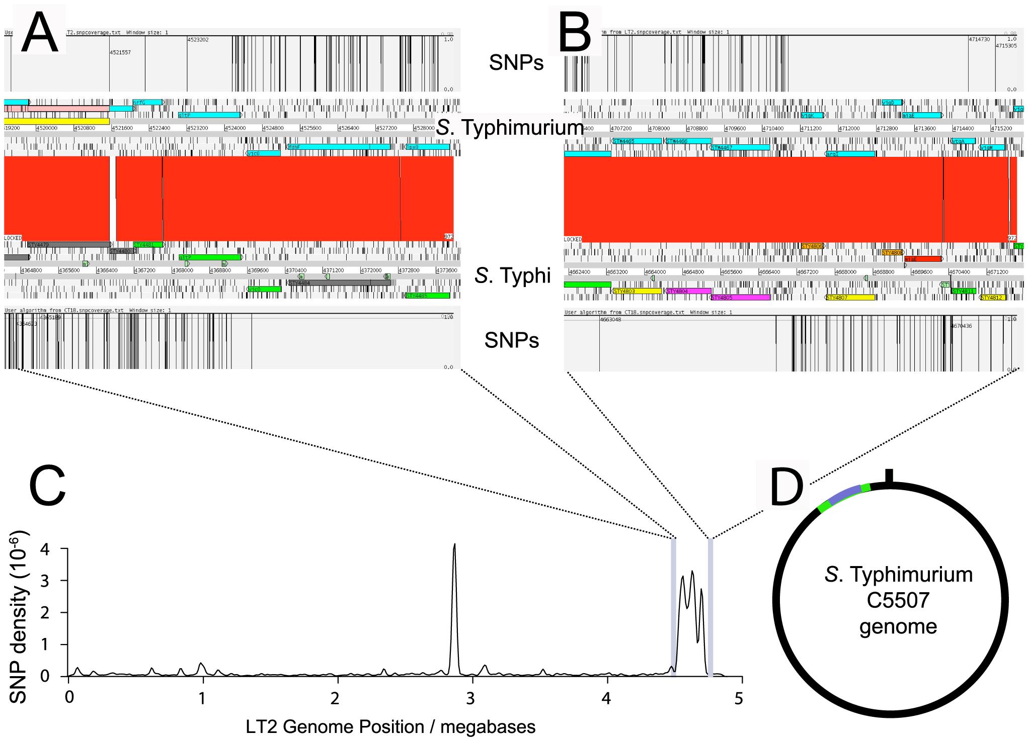 SNP density of <i>S.</i> Typhimurium C5.507 Vi<sup>+</sup> mapped to <i>S.</i> Typhimurium LT2 and <i>S.</i> Typhi CT18.