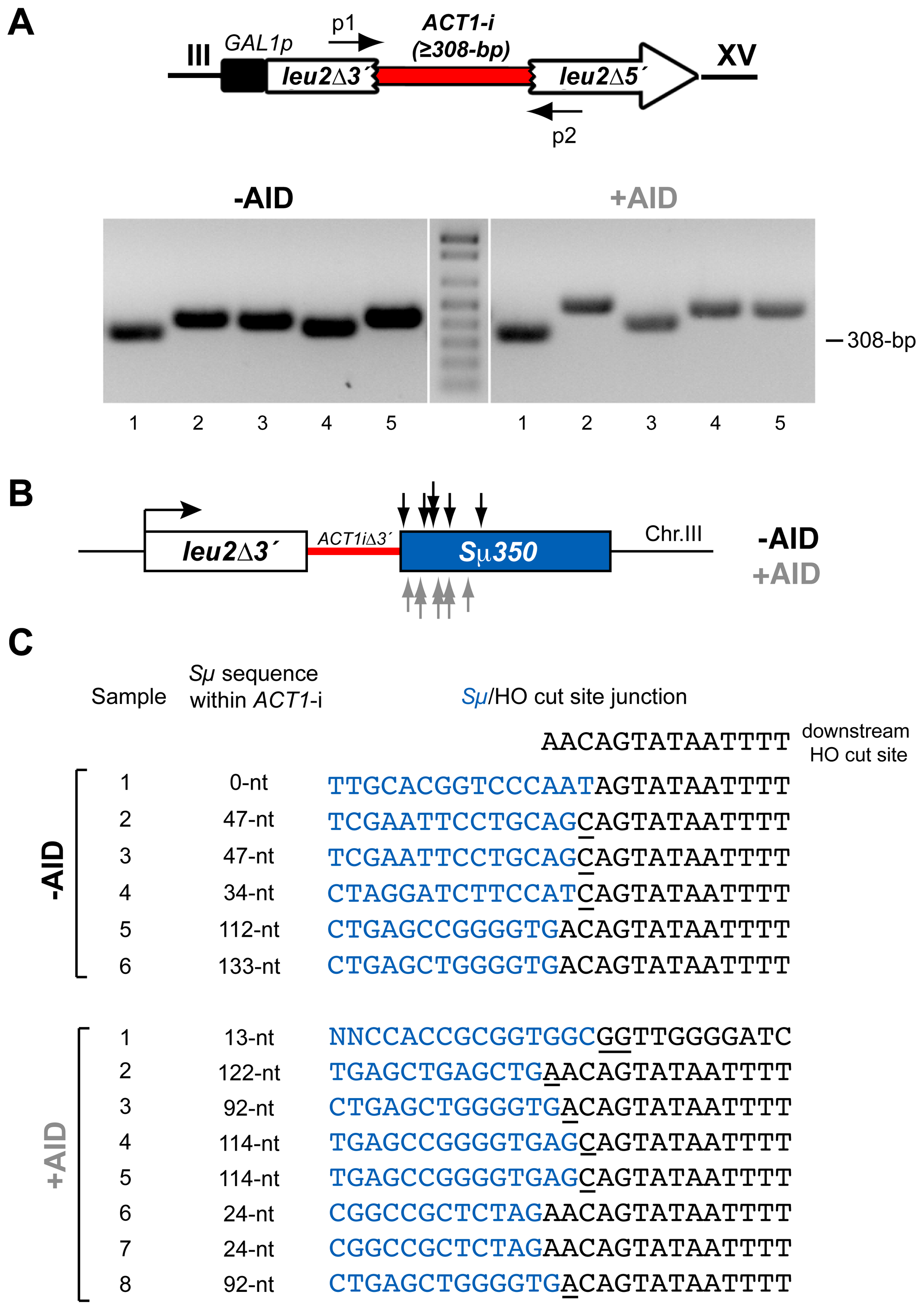 PCR analysis of CT breakpoints in <i>hpr1Δ</i> yeast with the Sµ350 sequence integrated at chromosome III.
