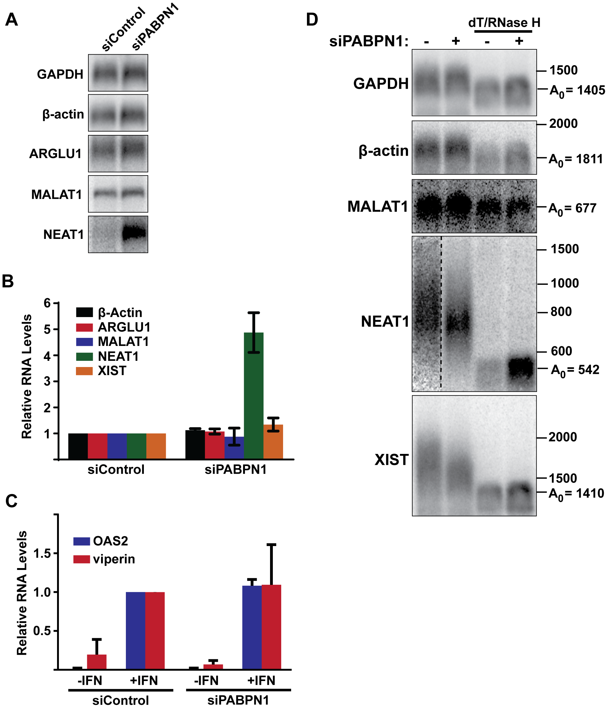 Effects of PABPN1 knockdown on steady-state levels and poly(A) tail lengths of endogenous RNAs.