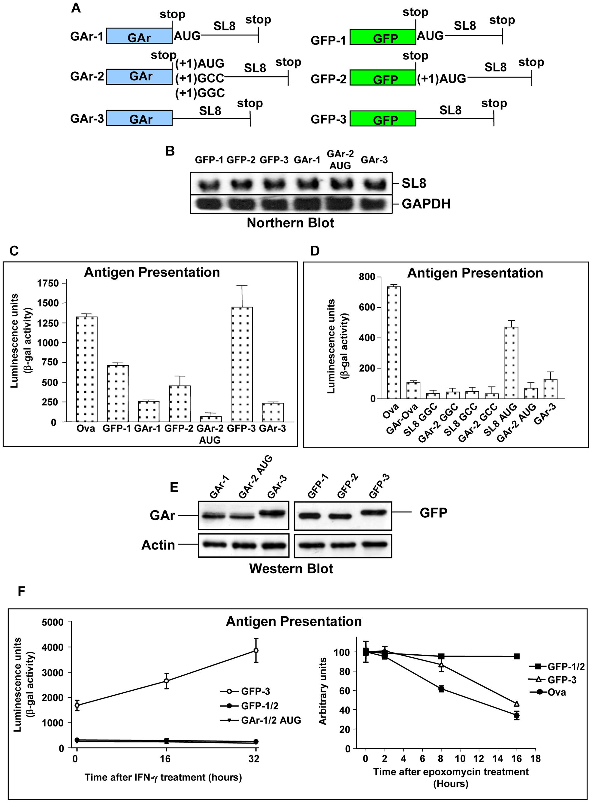 Inhibition of protein degradation is not essential for the GAr sequence to prevent endogenous antigen presentation for the MHC class I restricted pathway.
