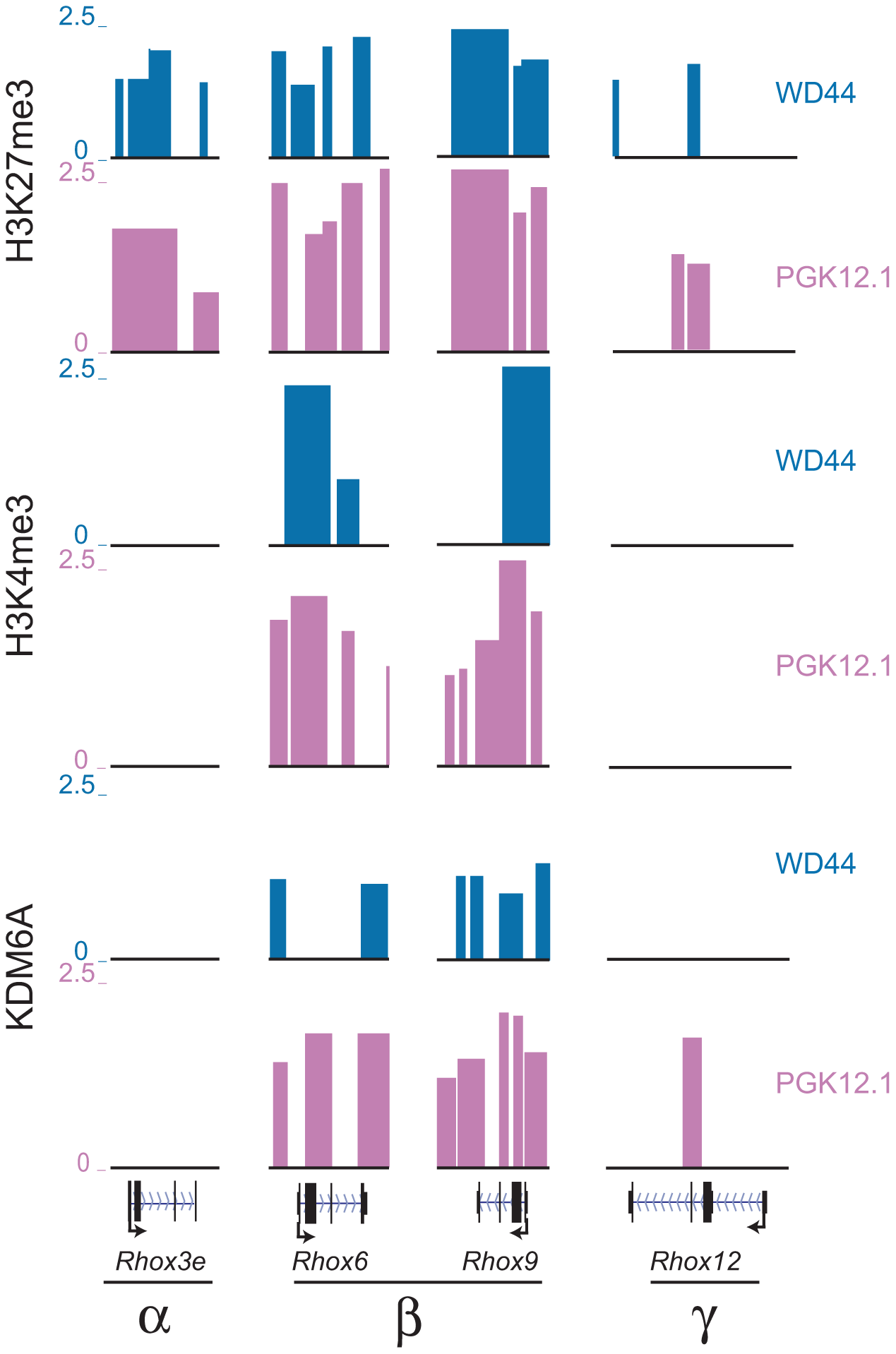 <i>Rhox6</i> and <i>9</i> are bivalent and preferentially occupied by KDM6A in female ES cells.