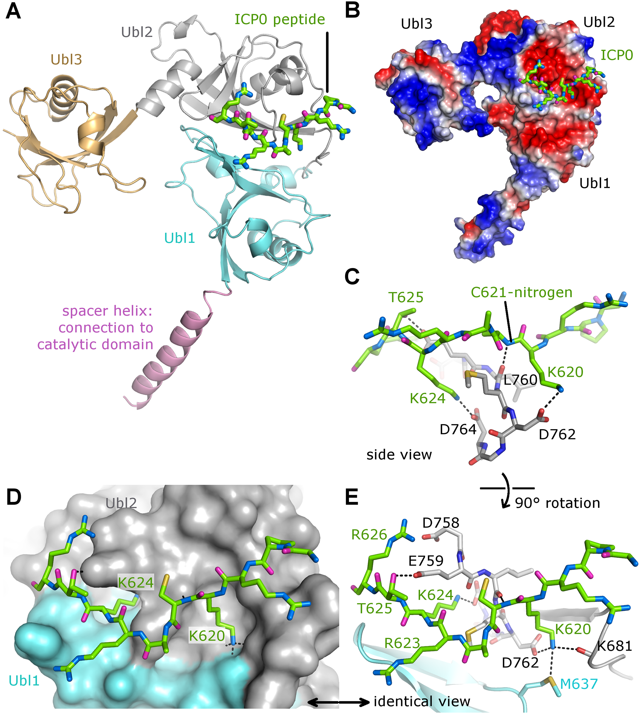 The crystal structure of the Ubl123-ICP0 peptide complex.