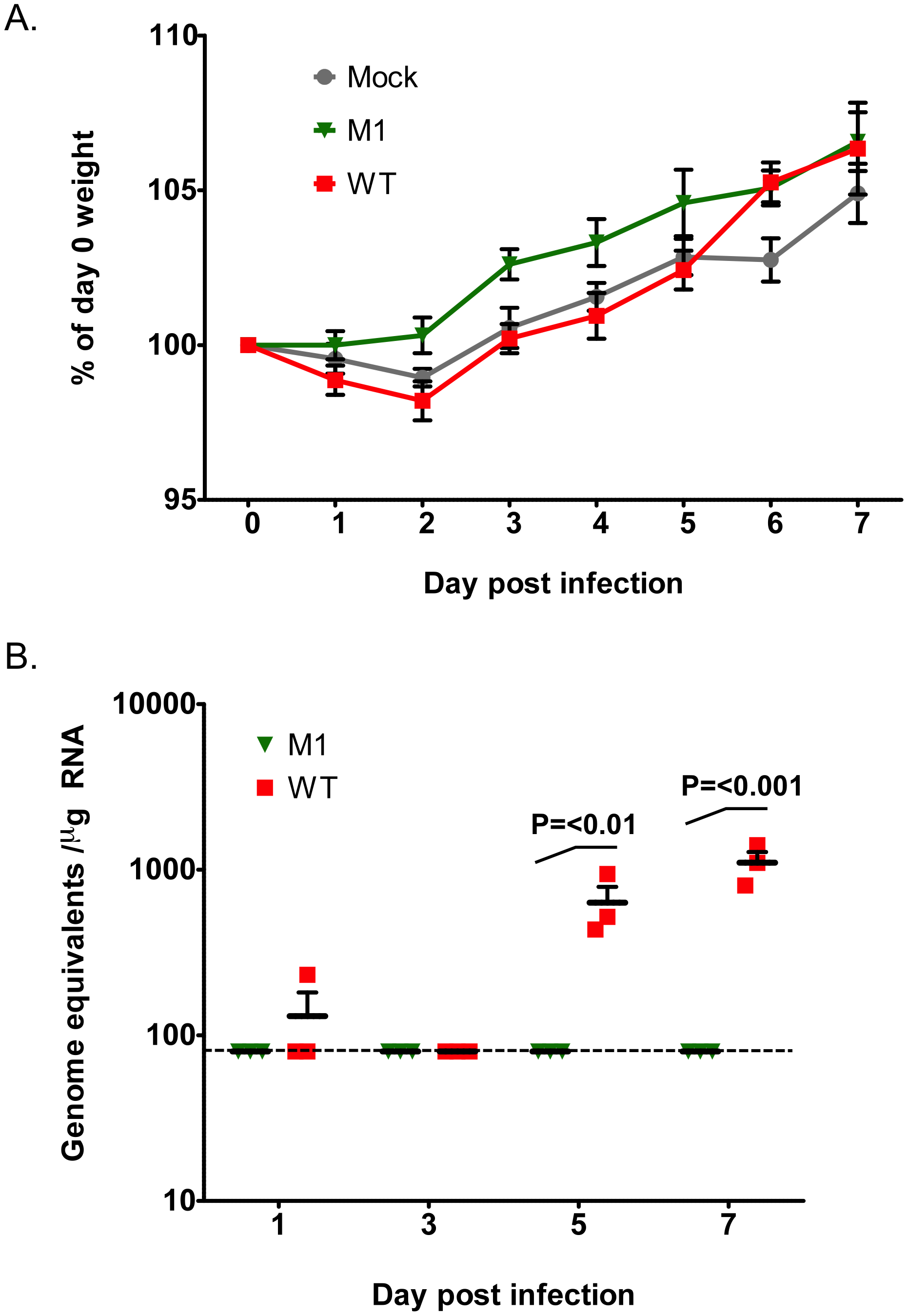 VF1 expression is required for virus efficient replication <i>in vivo</i>.