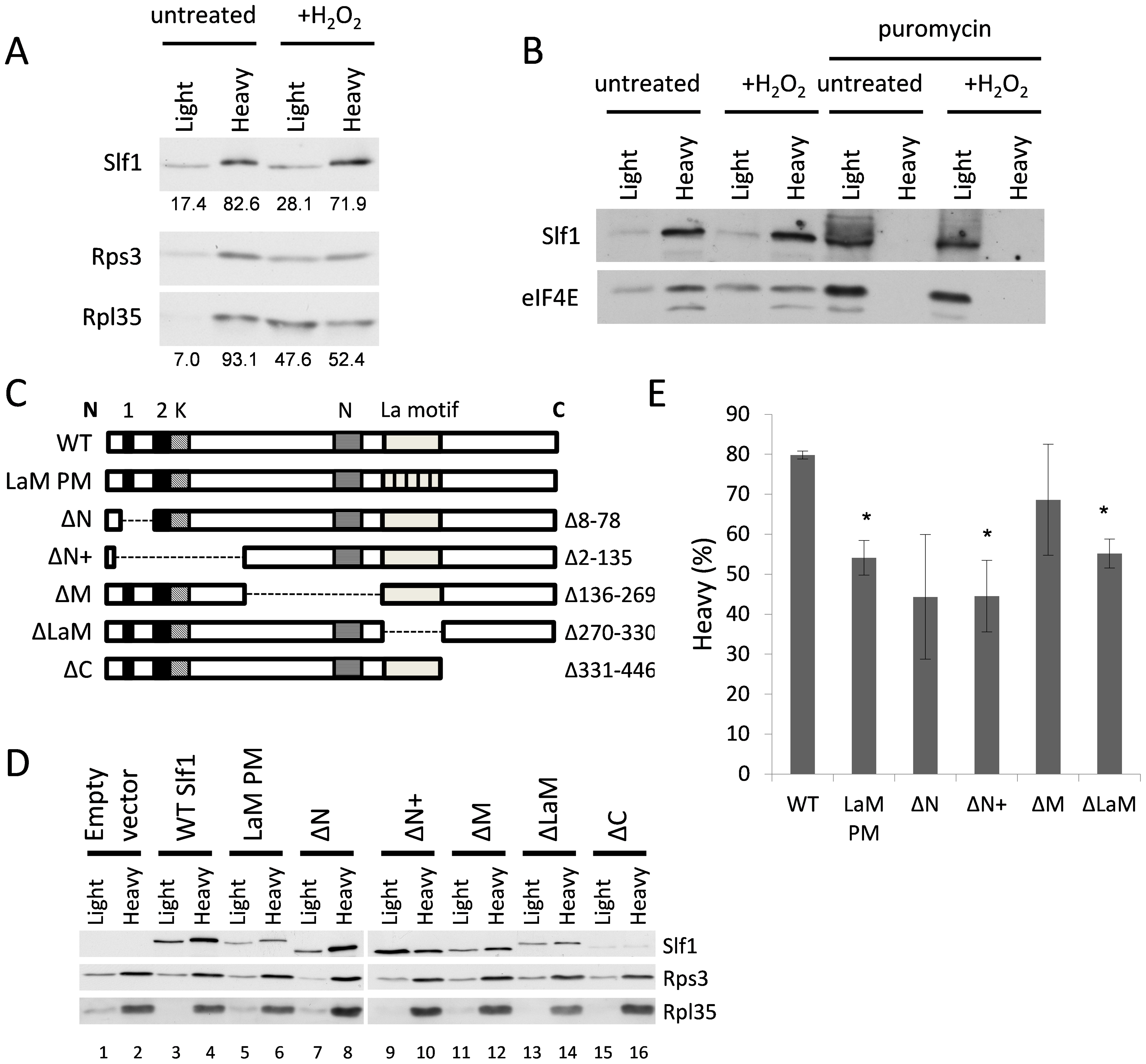 Identification of regions in Slf1p required for its ribosome-interaction.