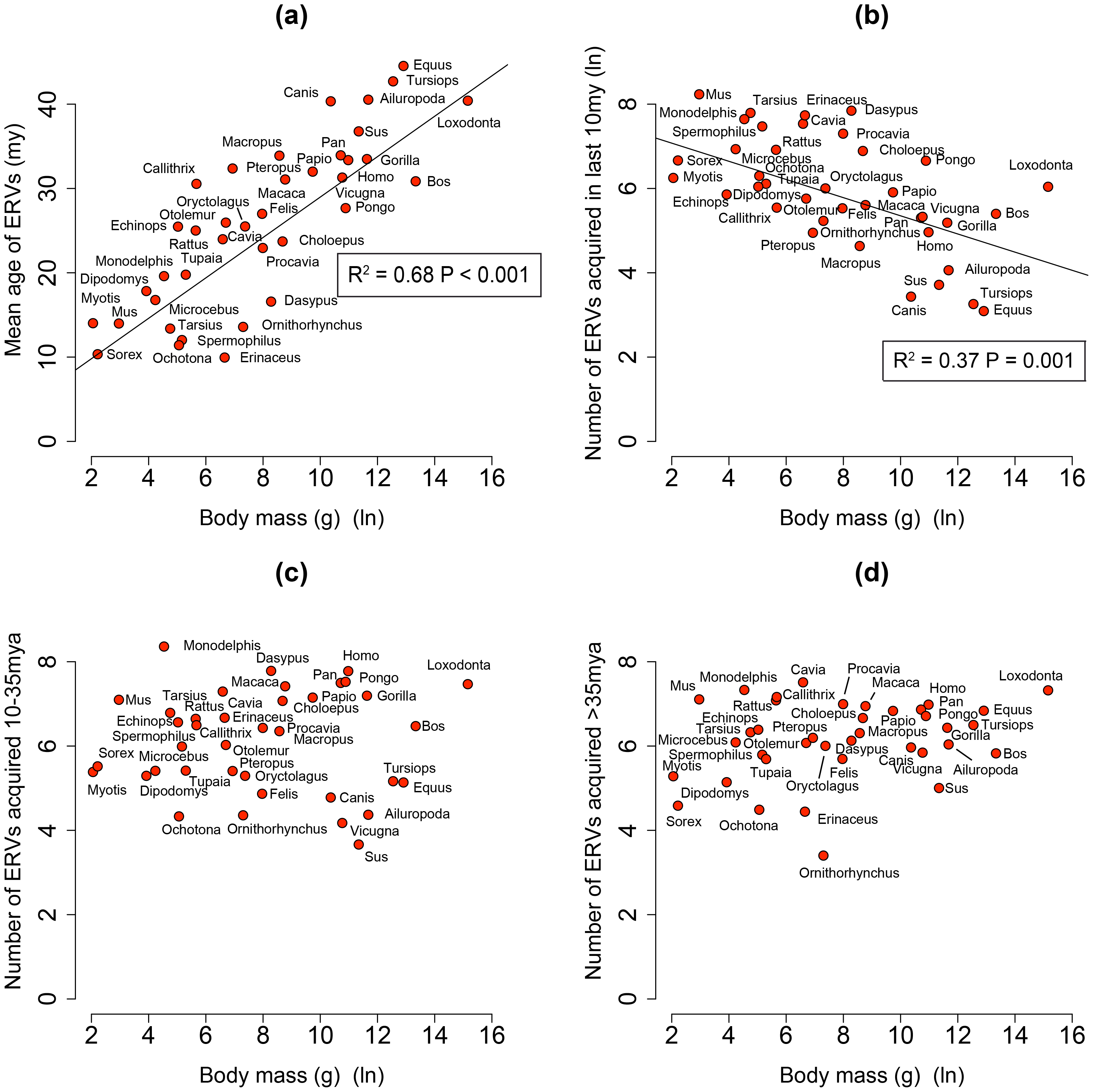 (a) Correlation between mean age of all ERV integrations and body mass from the genomes of 38 mammals.