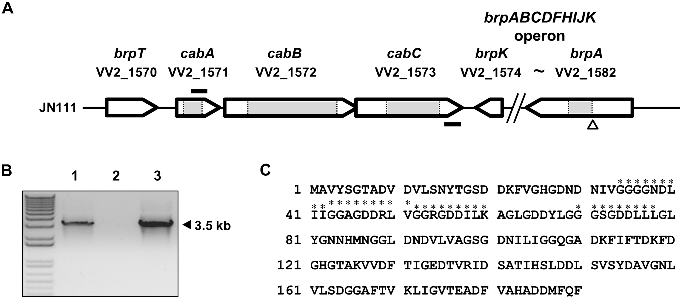 Genetic organization of the <i>cabABC</i> operon and amino acid sequence of CabA.