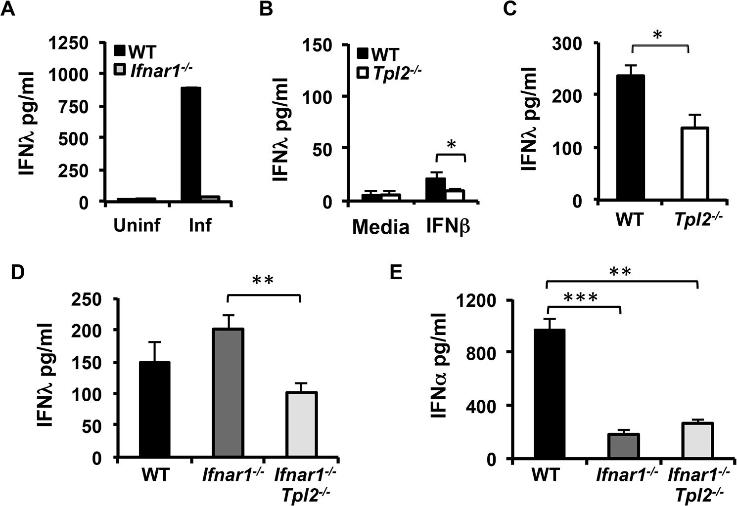 IFNλ production is IFNAR-independent in influenza virus-infected lungs.