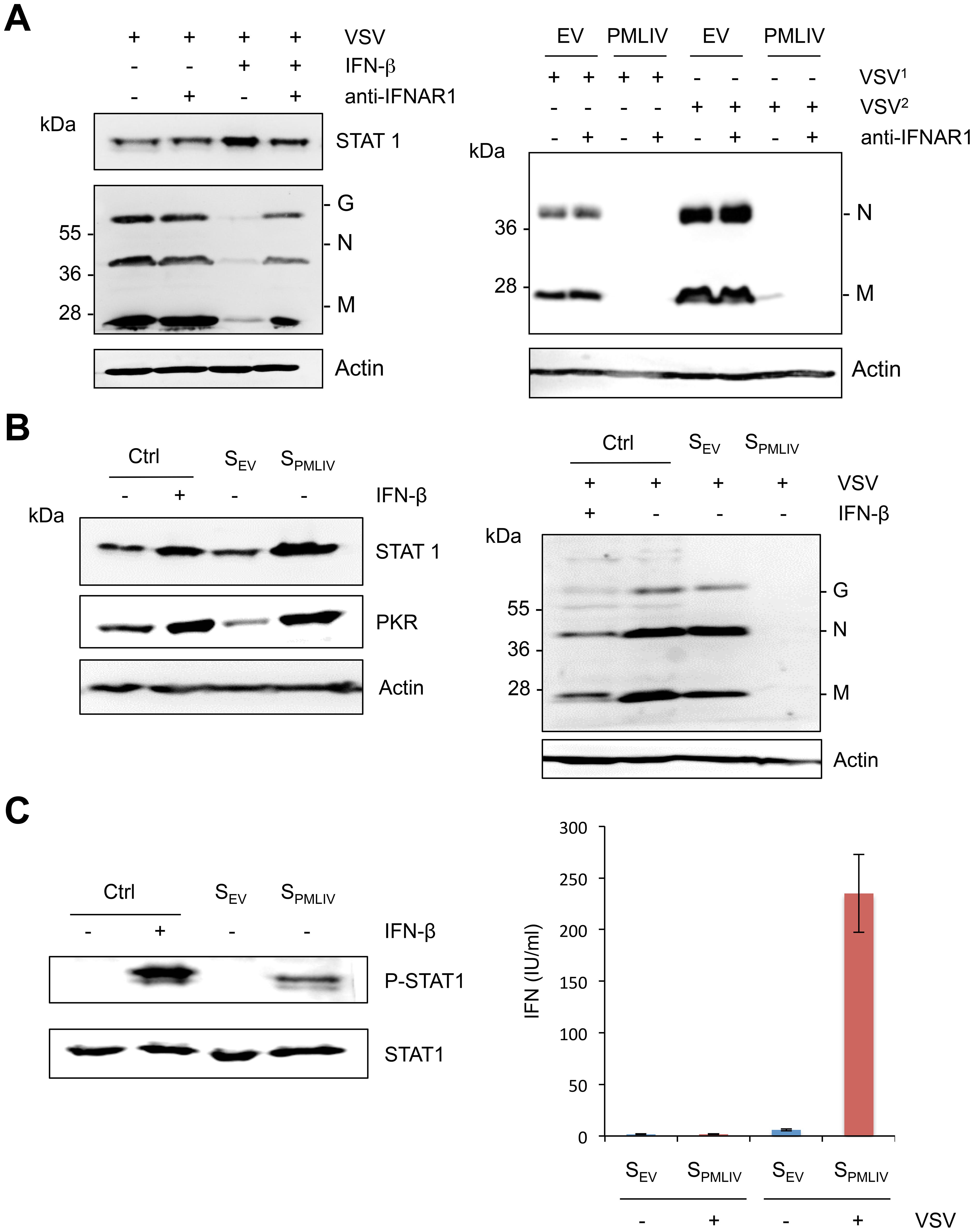 Intrinsic and innate immune properties of PMLIV.