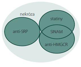 Vennův diagram podjednotek IMNM. Anti-HMGCR+, SINAM, anti-SRP+ a skupina bez přítomnosti protilátek – klasifikace na základě serologie a terapie statiny v předchorobí. Fig. 1. Venn diagram of IMNM subunits. Anti-HMGCR+, SINAM, anti-SRP+, and the group without the presence of antibodies – classification based on serology and statin therapy medical history.