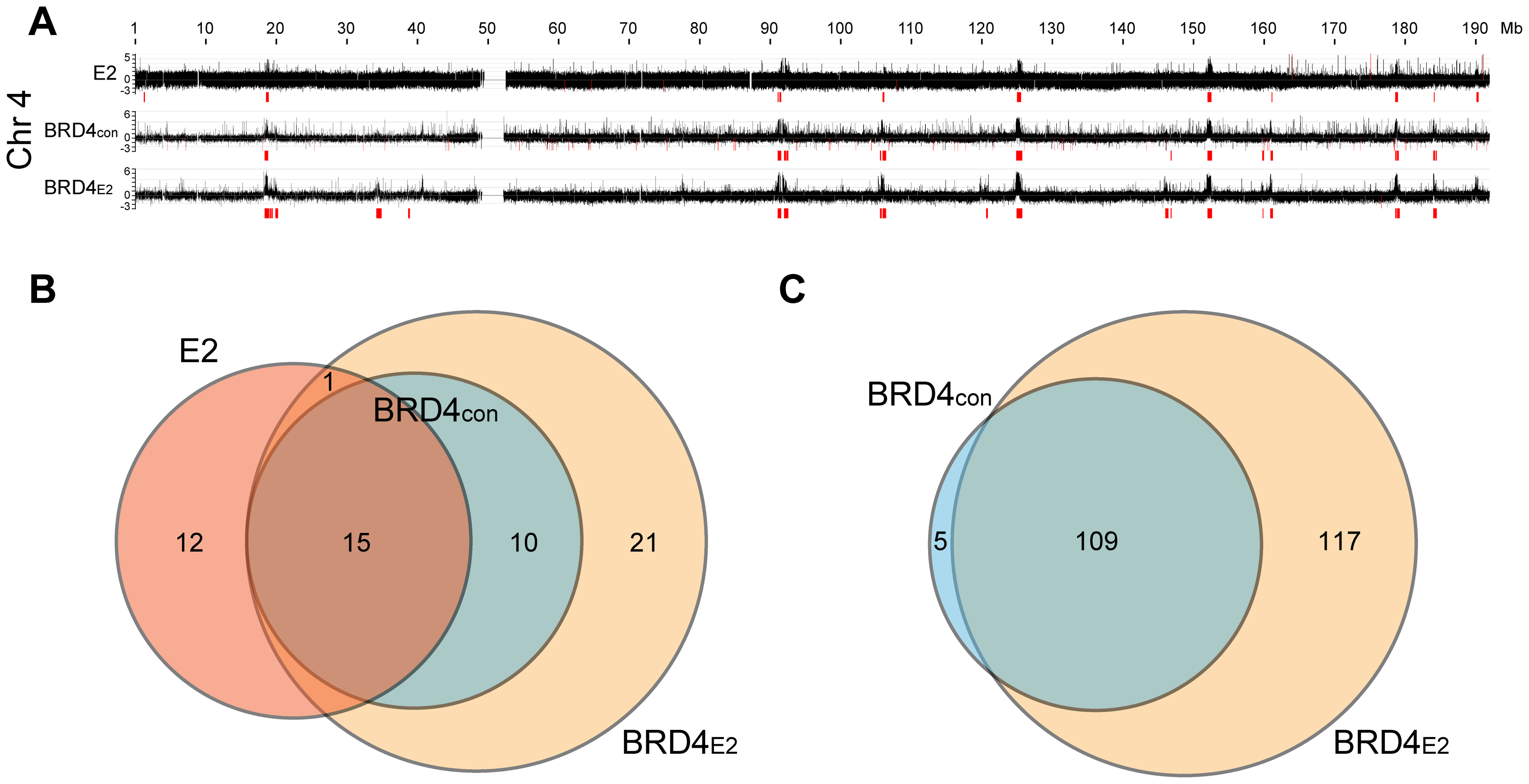 Profile of BRD4 binding to human chromosomes in C-33-1E2 cells.