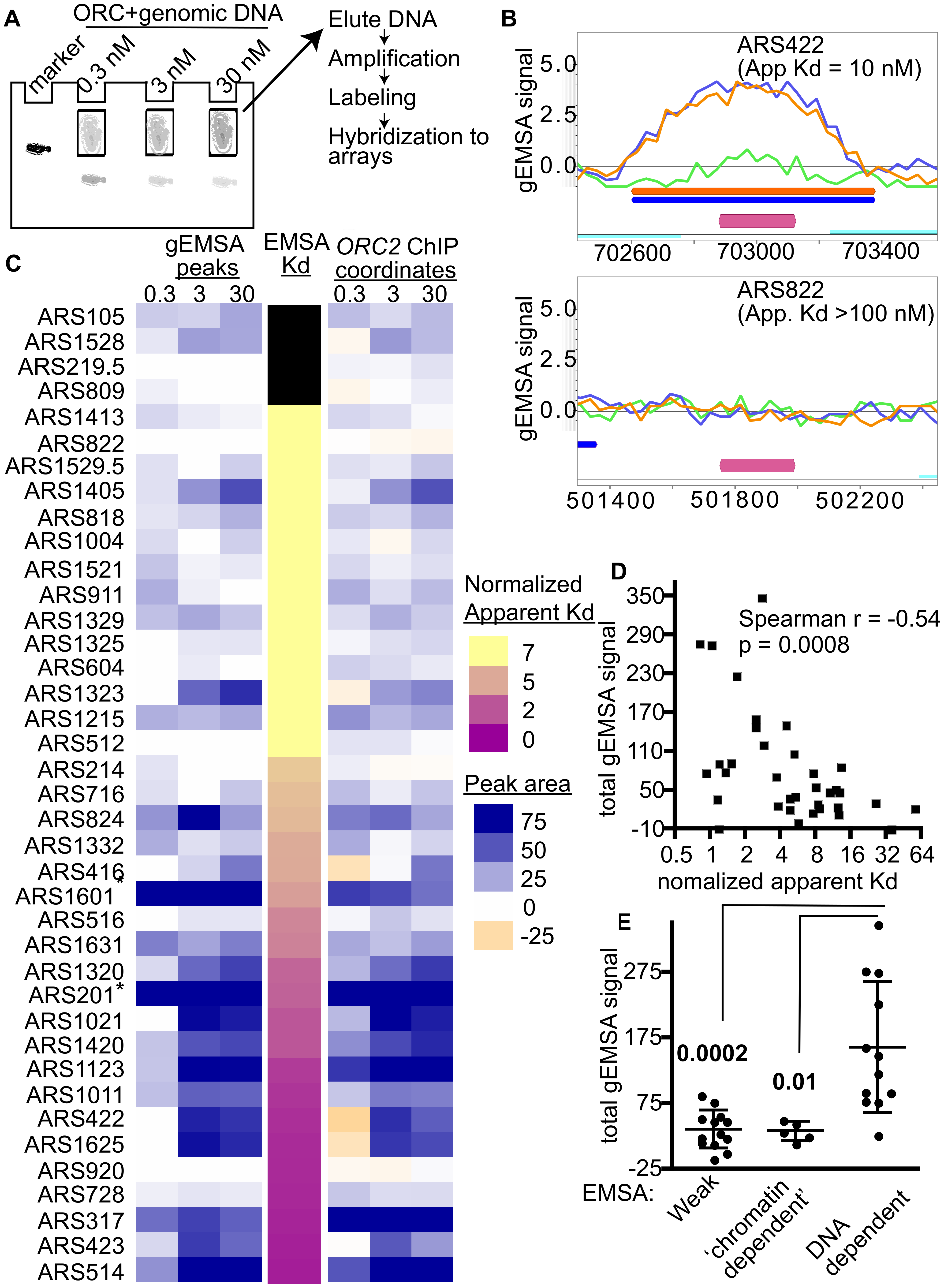 Extending comparisons of in vivo and in vitro ORC-origin interaction strengths genome-wide.