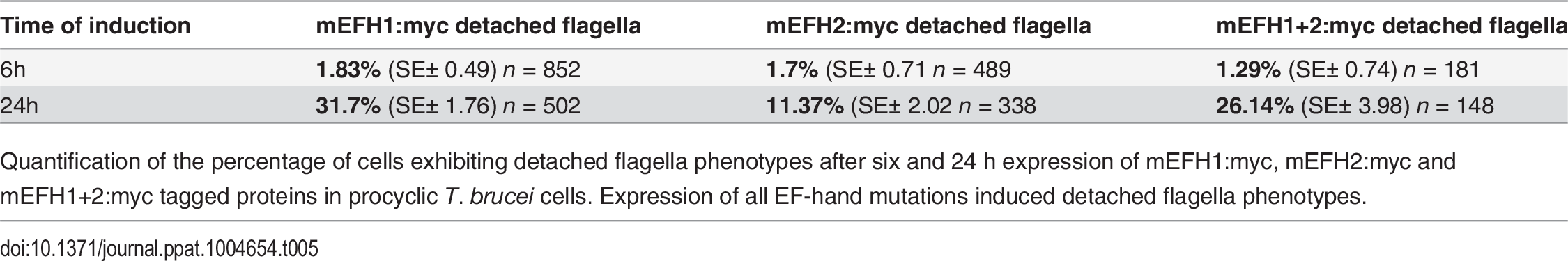 mEFH:myc induced detached flagellum phenotypes after expression in <i>T</i>. <i>brucei</i> cells.
