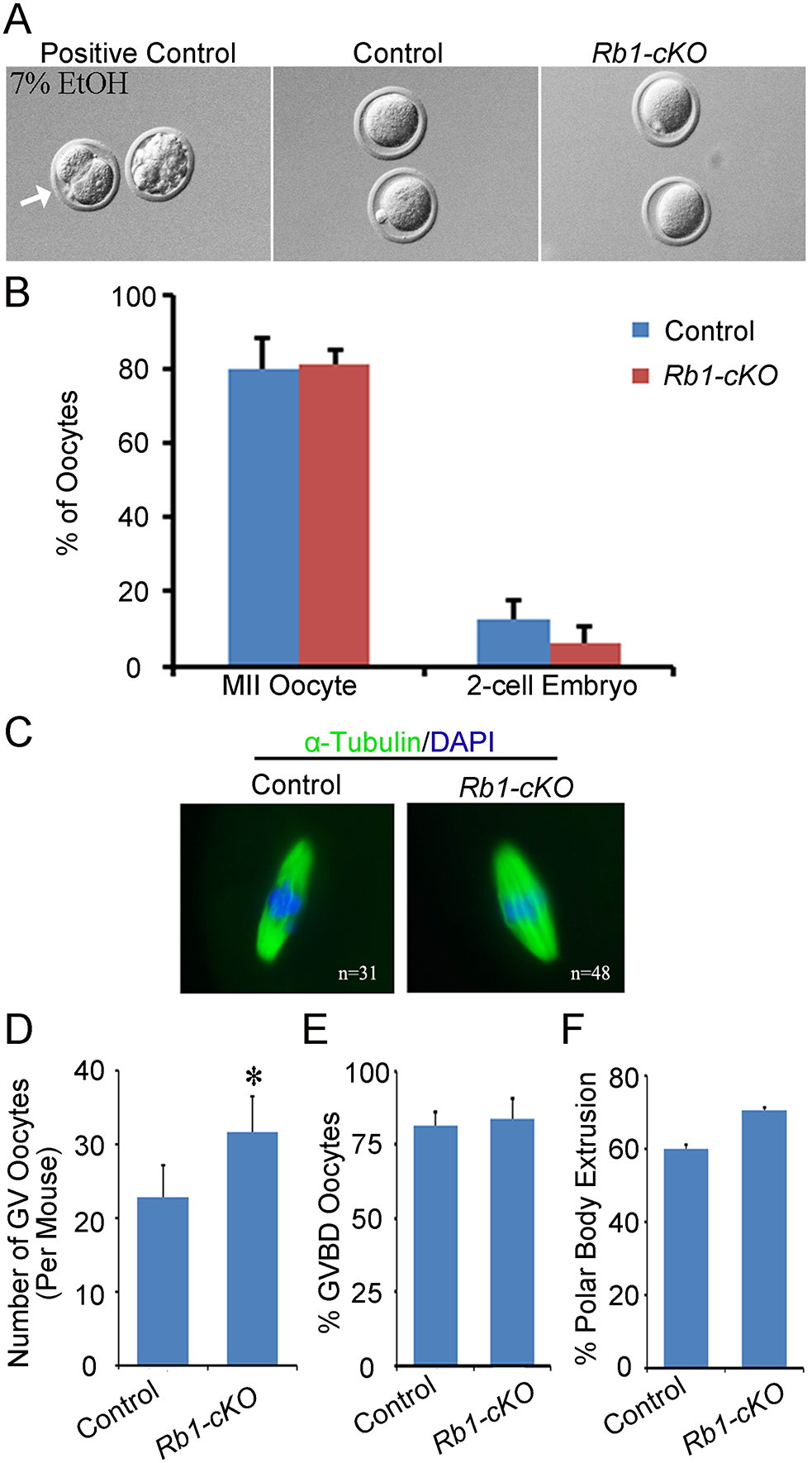 Propensity for parthenogenetic activation is not increased in <i>Rb1</i> deficient oocytes.