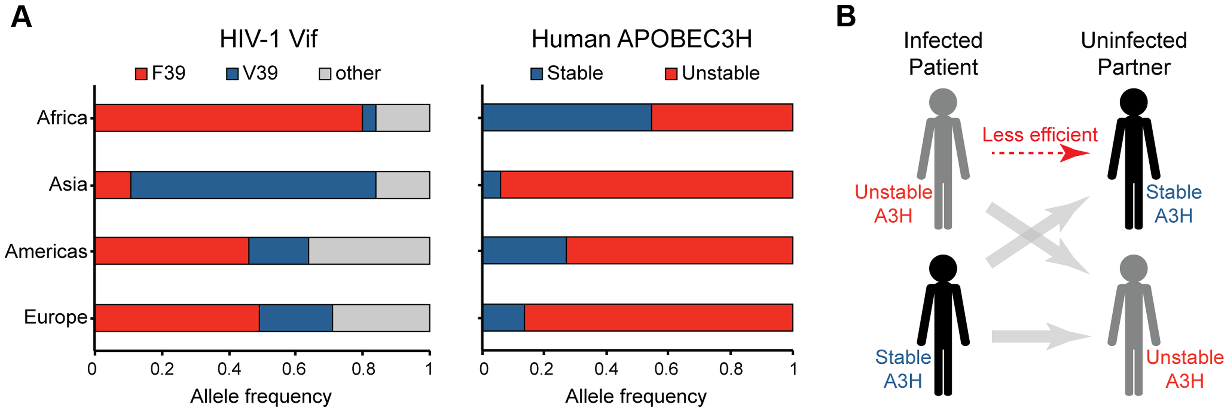 Correlations between the global distributions of HIV-1 hyper-Vif alleles and human A3H haplotypes.
