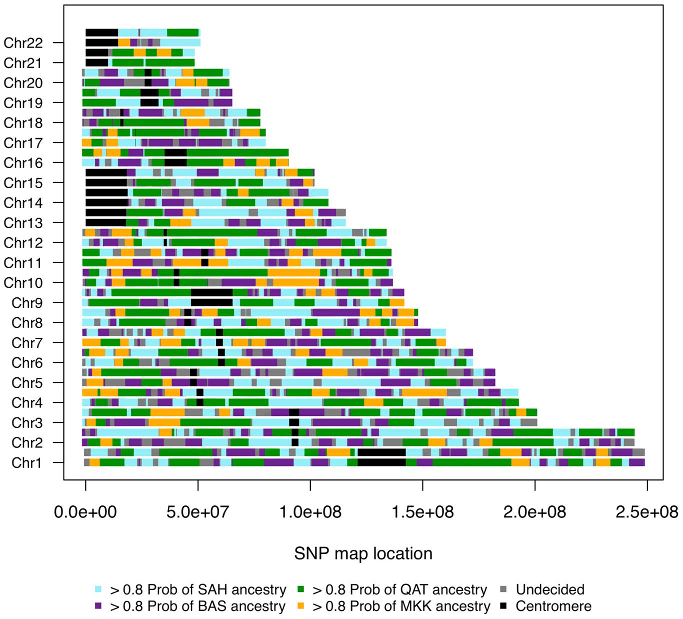 Genome admixture deconvolution karyogram of an Egyptian.