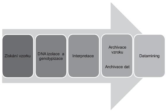 Procesní pohled na DNA analýzu