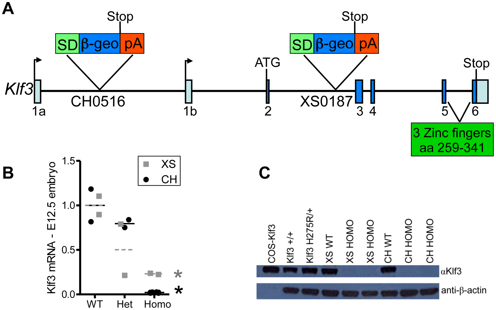 Gene trap insertion sites and effects on <i>Klf3</i> mRNA and protein.
