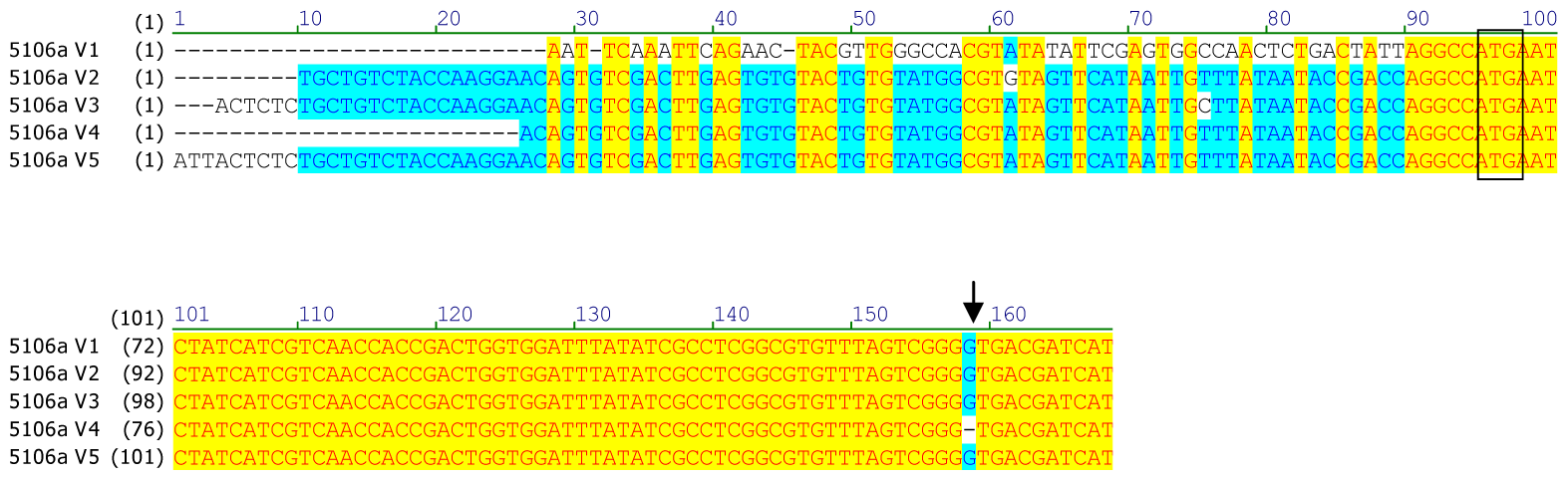 Alignment of the 5′UTR and N-terminal coding sequence of <i>CYP6CY3</i> copy variants in the <i>M. persicae</i> clone 5191a.
