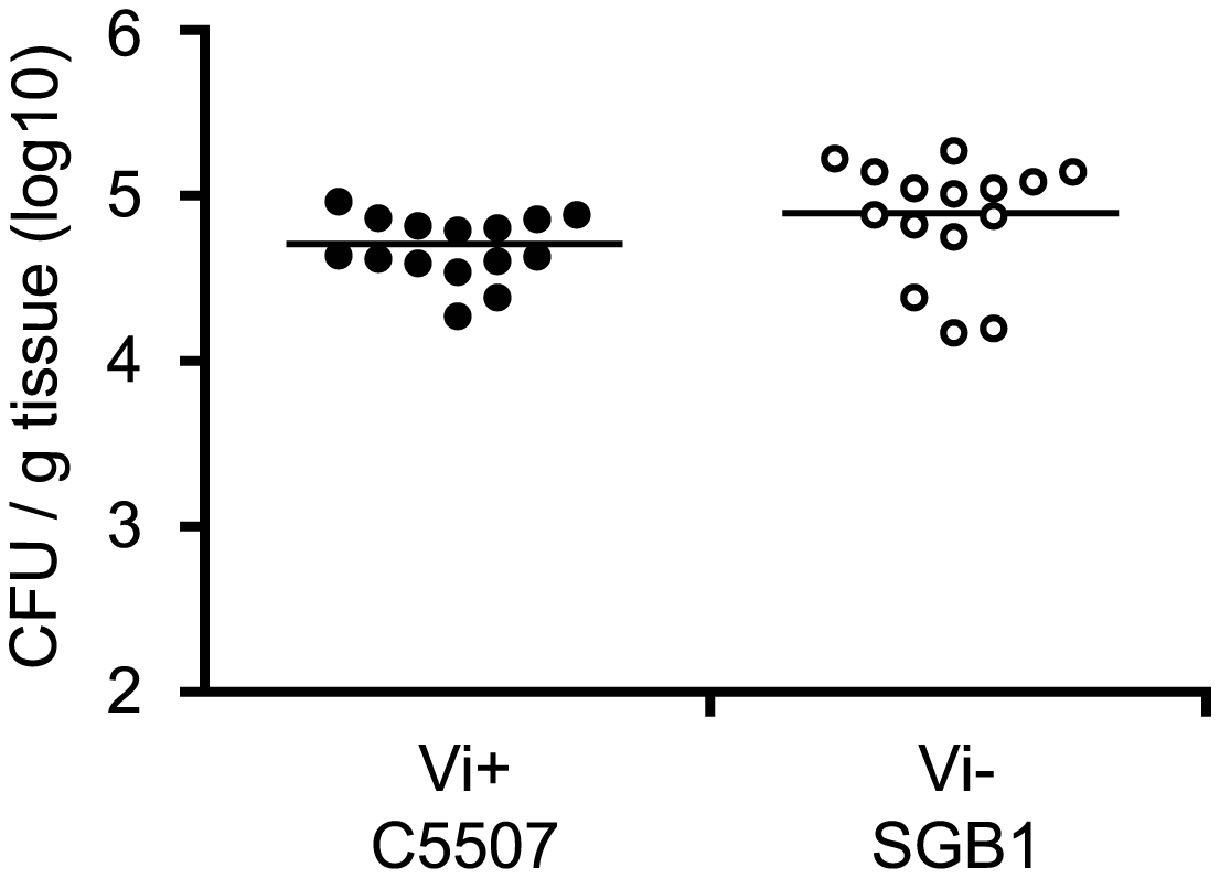 Colonisation of C57BL/6 mouse spleen by <i>S.</i> Typhimurium C5507, and <i>S.</i> Typhimurium SGB1 (C5507 D<i>tviB</i>::kan<sup>r</sup>).
