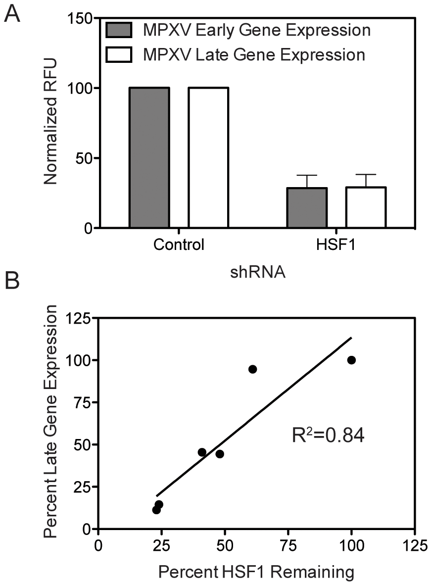 HSF1 is also a critical host factor for monkeypox infection.