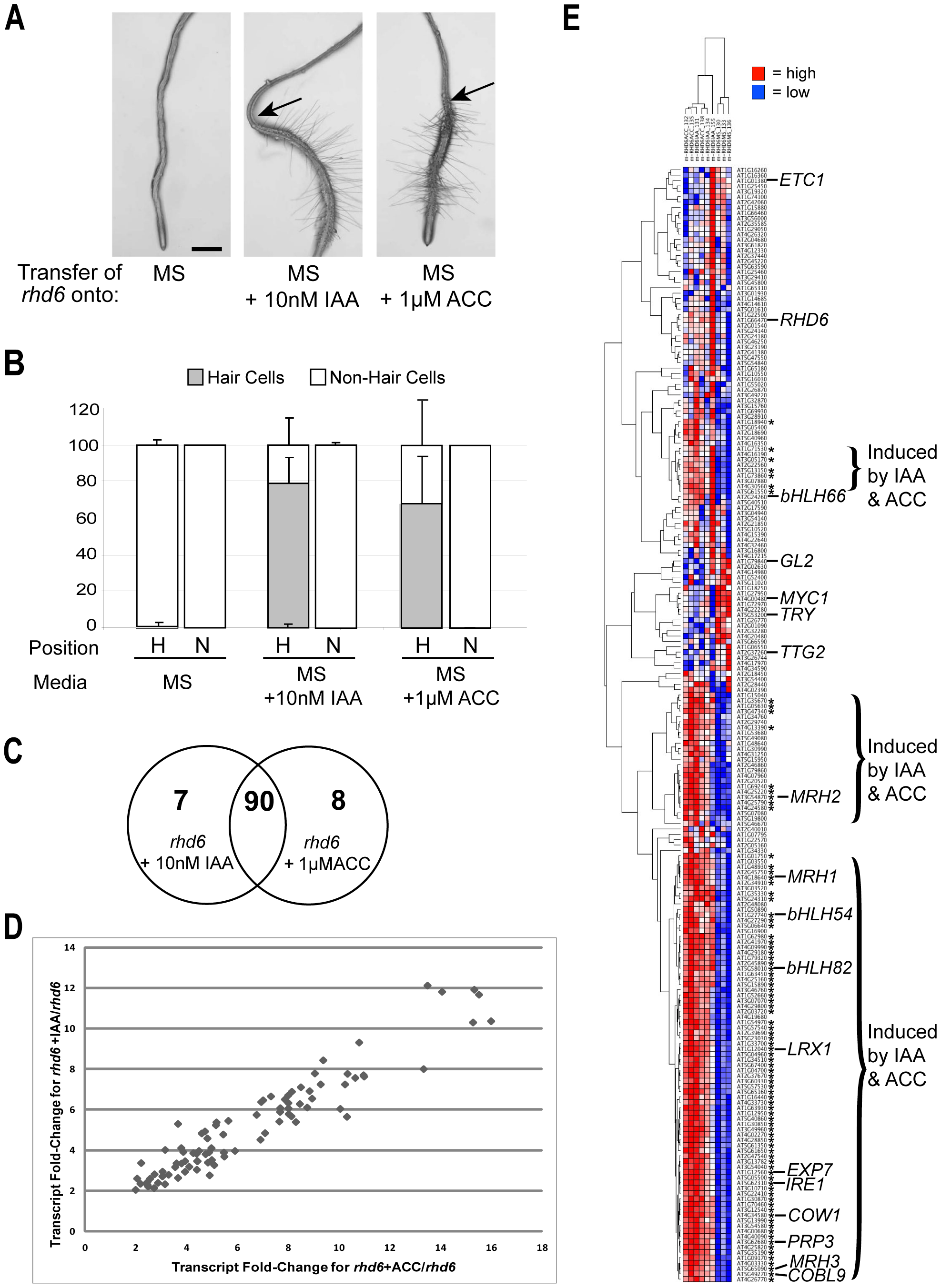 Molecular genetic analysis of root-hair differentiation induced by auxin and ethylene.