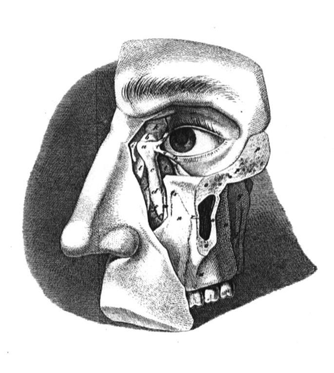 Ilustrace z učebnice J. N. Fischera