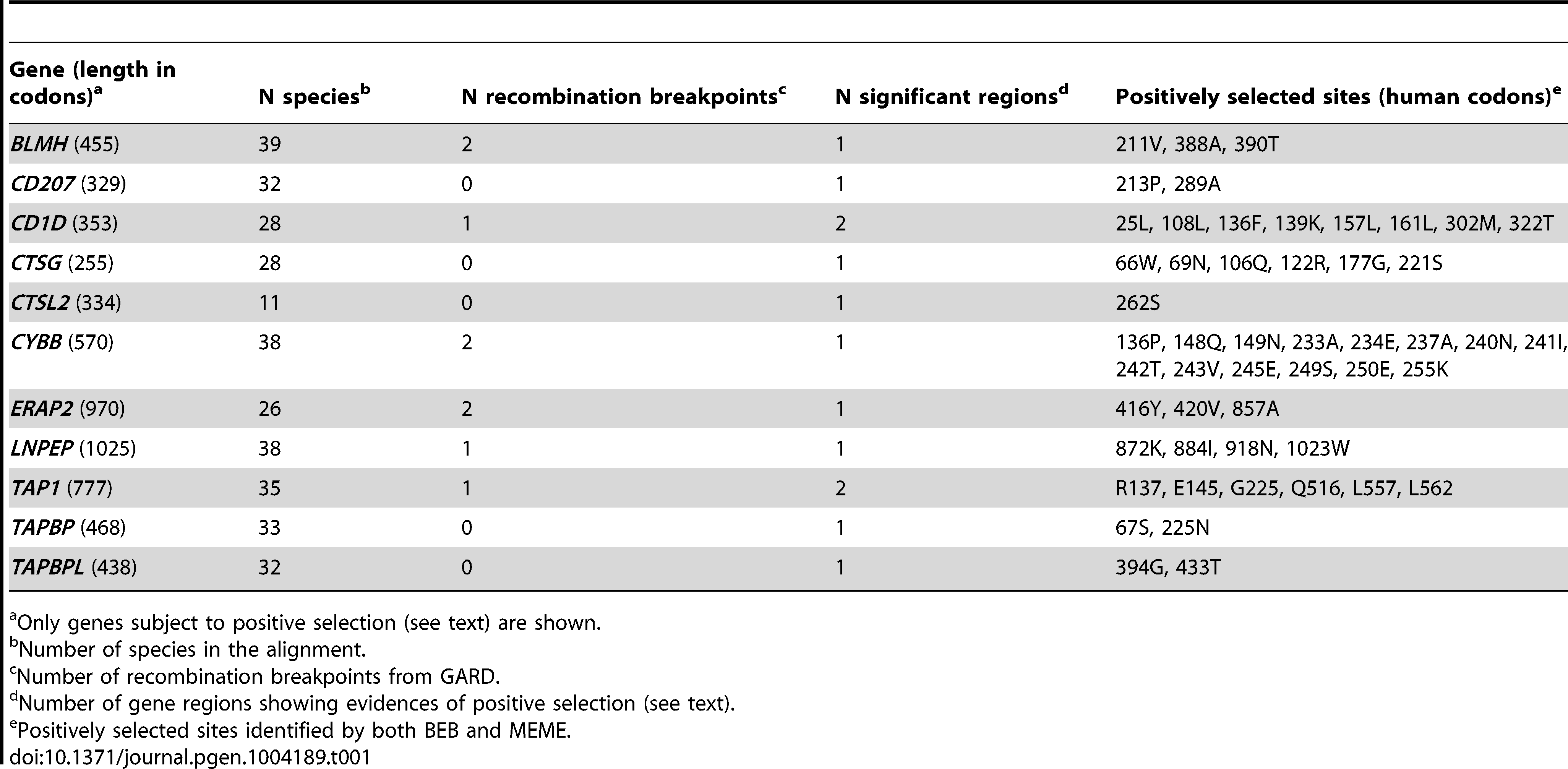 Evolutionary analysis of mammalian/primate APP genes.