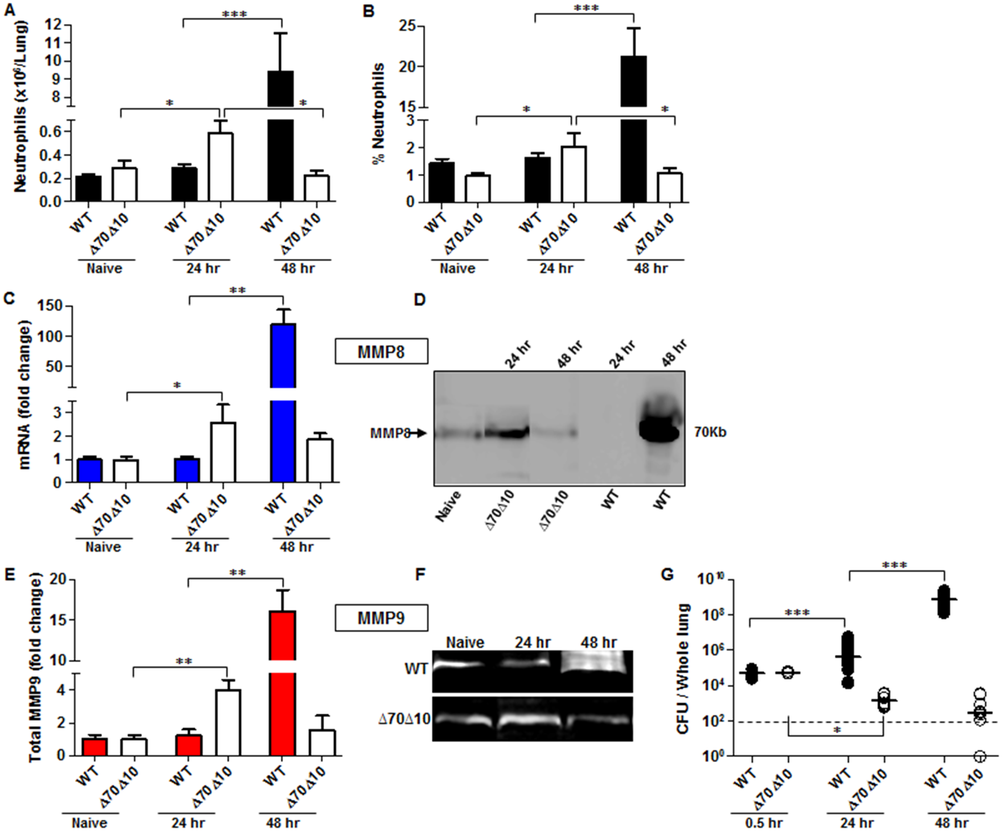 Bacterial propagation and neutrophil infiltration to the lungs following airways infection of mice with <i>Y</i>. <i>pestis</i> strains.