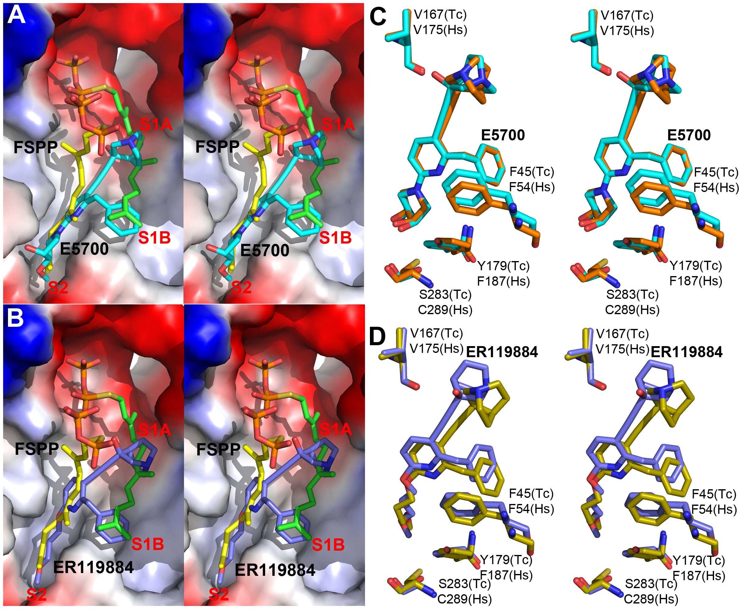 Crystal structures of E5700 and ER119884 bound to TcSQS and HsSQS.