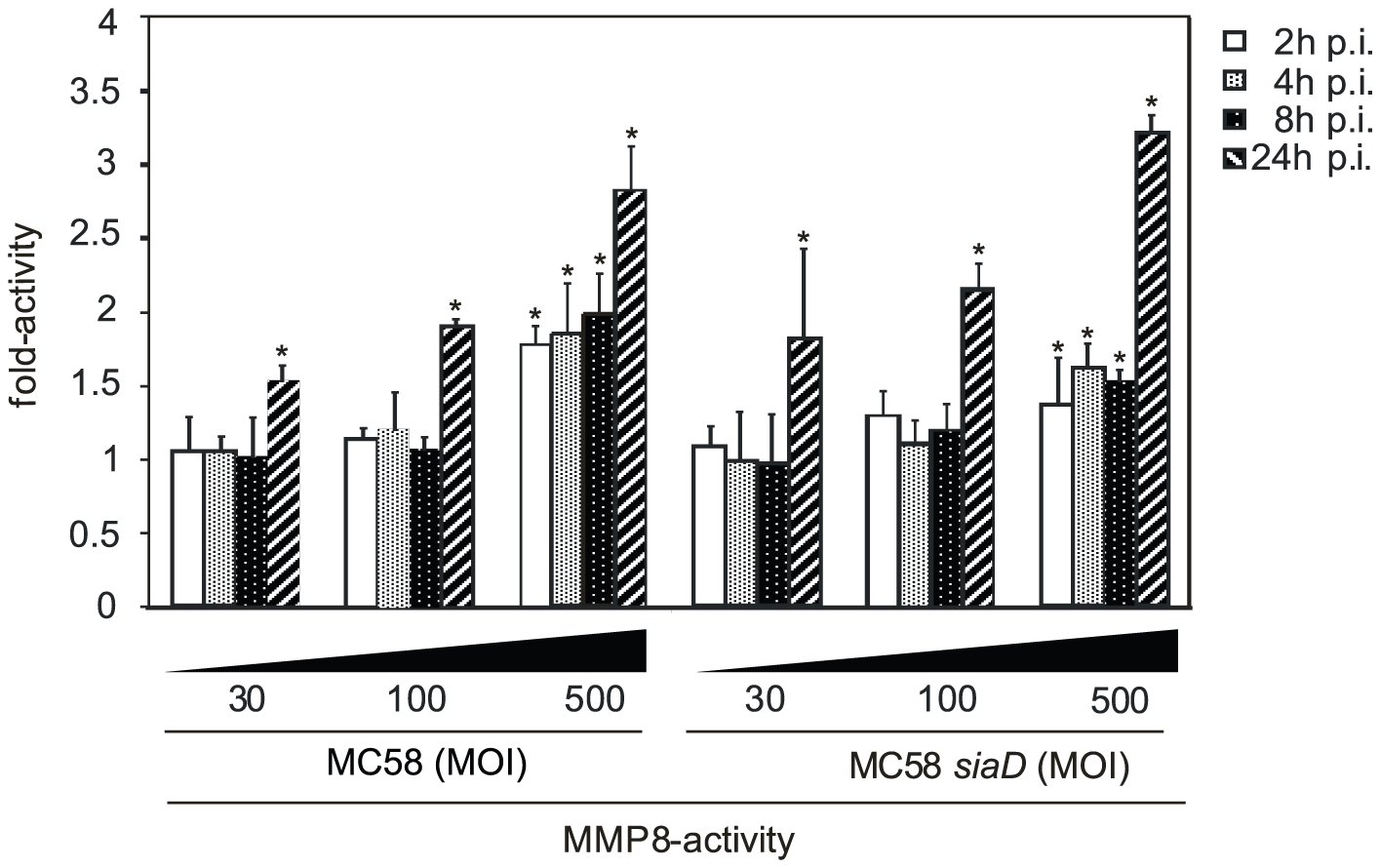 HBMEC were incubated with MC58 and MC58 <i>siaD</i> using indicated concentration of bacteria (MOIs of 10, 30 and 500) and matrix metalloproteinase (MMP)-8 activity was measured in supernatants collected from infected HBMEC at 2, 4, 8, and 24 h p.i. using the Sensolyte 520 MMP-8 assay kit.