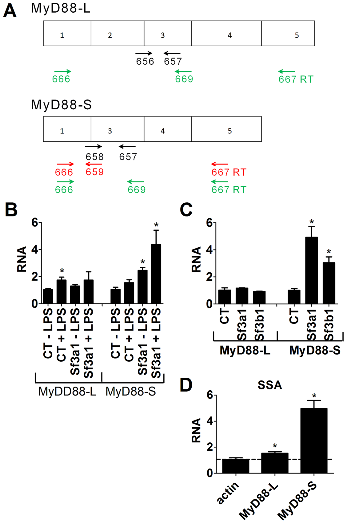 qPCR assay demonstrates that inhibition of SF3A1 or SF3B1 enhances production of MyD88<sub>S</sub> mRNA.