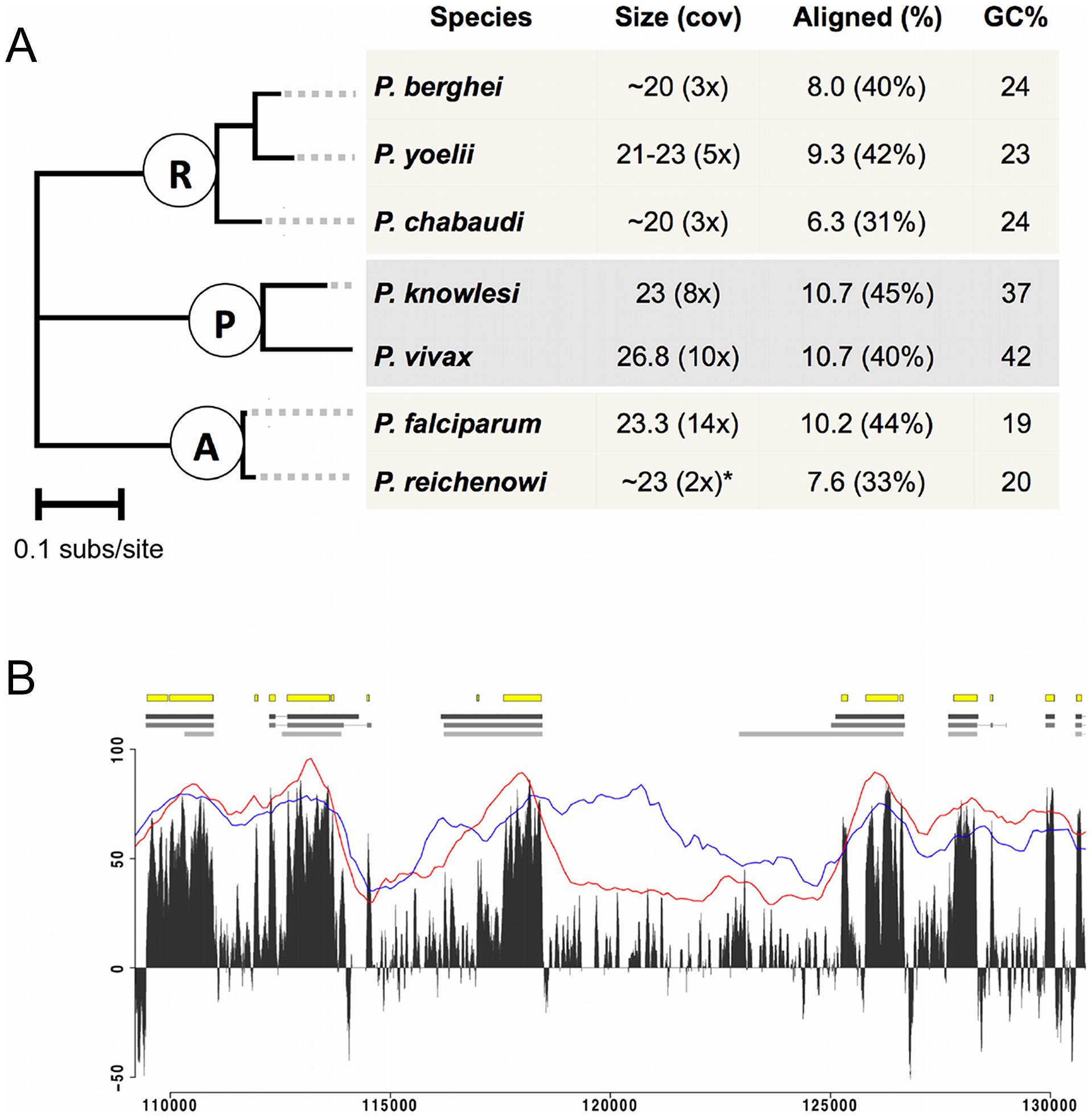 Genome-wide alignment of Plasmodium species.