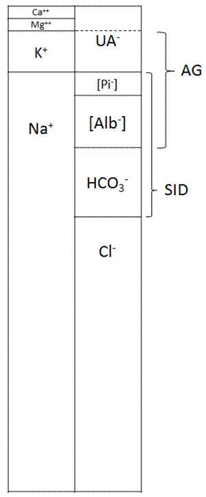 Princip elektroneutrality. Součet plazmatických kationtů je vždy roven součtu plazmatických aniontů. Tradiční přístup hodnotí metabolickou složku acidobázické rovnováhy podle hodnoty [HCO<sup>3-</sup>]. Stewartův Fenclův přístup naopak vychází z principu elektroneutrality a považuje [HCO3-] za hodnotu závislou na koncentraci všech ostatních iontů plazmy. [HCO<sup>3-</sup>] se tedy nemůže měnit sama o sobě, ale tehdy a jen tehdy, když se změní koncentrace kteréhokoli jiného iontu v obr. 1, a to bez ekvimolární změny iontu s opačným nábojem.  SID (strong ion difference) = [Na<sup>+</sup>] + [K<sup>+</sup>] + [Ca<sup>2+</sup>] + [Mg<sup>2+</sup>] – [Cl<sup>-</sup>] – [UA<sup>-</sup>]; dle Fencla lze spočítat nepřímo jako součet aniontů slabých kyselin: SID =  [HCO<sup>3-</sup>] + [Alb<sup>-</sup>] + [Pi<sup>-</sup>]. AG (anion gap, aniontová mezera) = [Na<sup>+</sup>] + [K<sup>+</sup>] – [Cl<sup>-</sup>] – [HCO<sup>3-</sup>]. Z aniontové mezery usuzujeme při tradičním přístupu na koncentraci aniontů silných kyselin které běžně nestanovujeme [UA<sup>-</sup>], ale s nepřesnostmi, protože v sobě zahrnuje i anionty slabých neprchavých kyselin [Alb<sup>-</sup>] a [Pi<sup>-</sup>], což v případě jejich odchylek od normy vede k falešné hodnotě AG. Korigujeme-li vypočtenou hodnotu AG na [Alb<sup>-</sup>] a [Pi<sup>-</sup>], dospějeme k hodnotě [UA<sup>-</sup>]. Přerušovaná čára v oblasti [UA<sup>-</sup>] znázorňuje příspěvek [Ca<sup>2+</sup>] + [Mg<sup>2+</sup>], na nějž se AG v praxi nekoriguje.