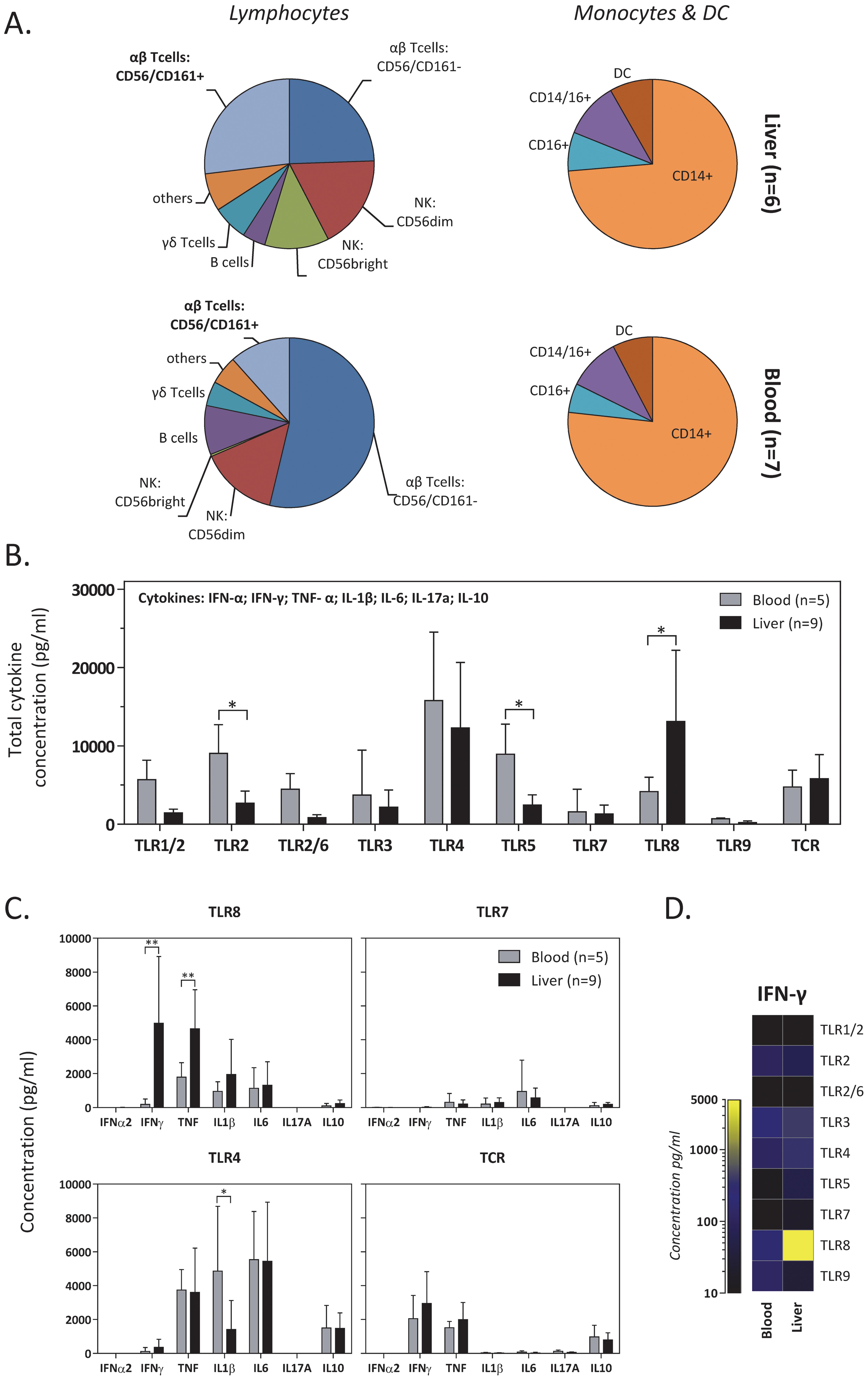 Selective stimulation of liver-derived cells by a TLR8 agonist.
