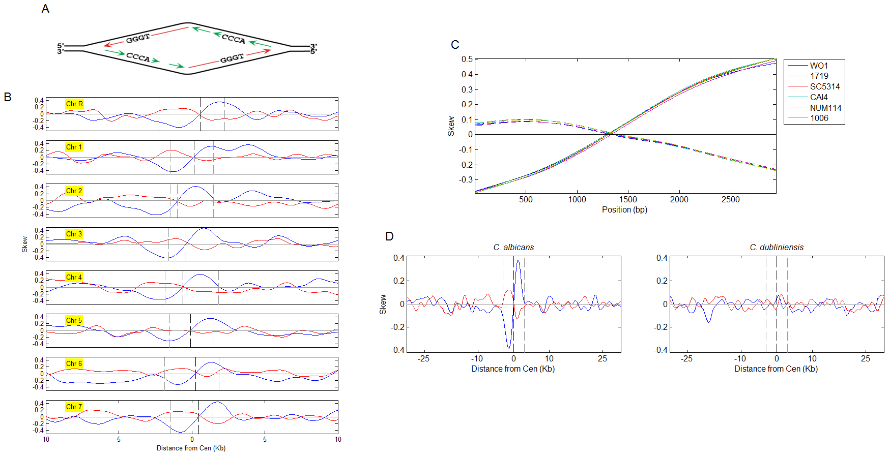 Nucleotide skew patterns and their correlation to syntenic conservation of centromere position.