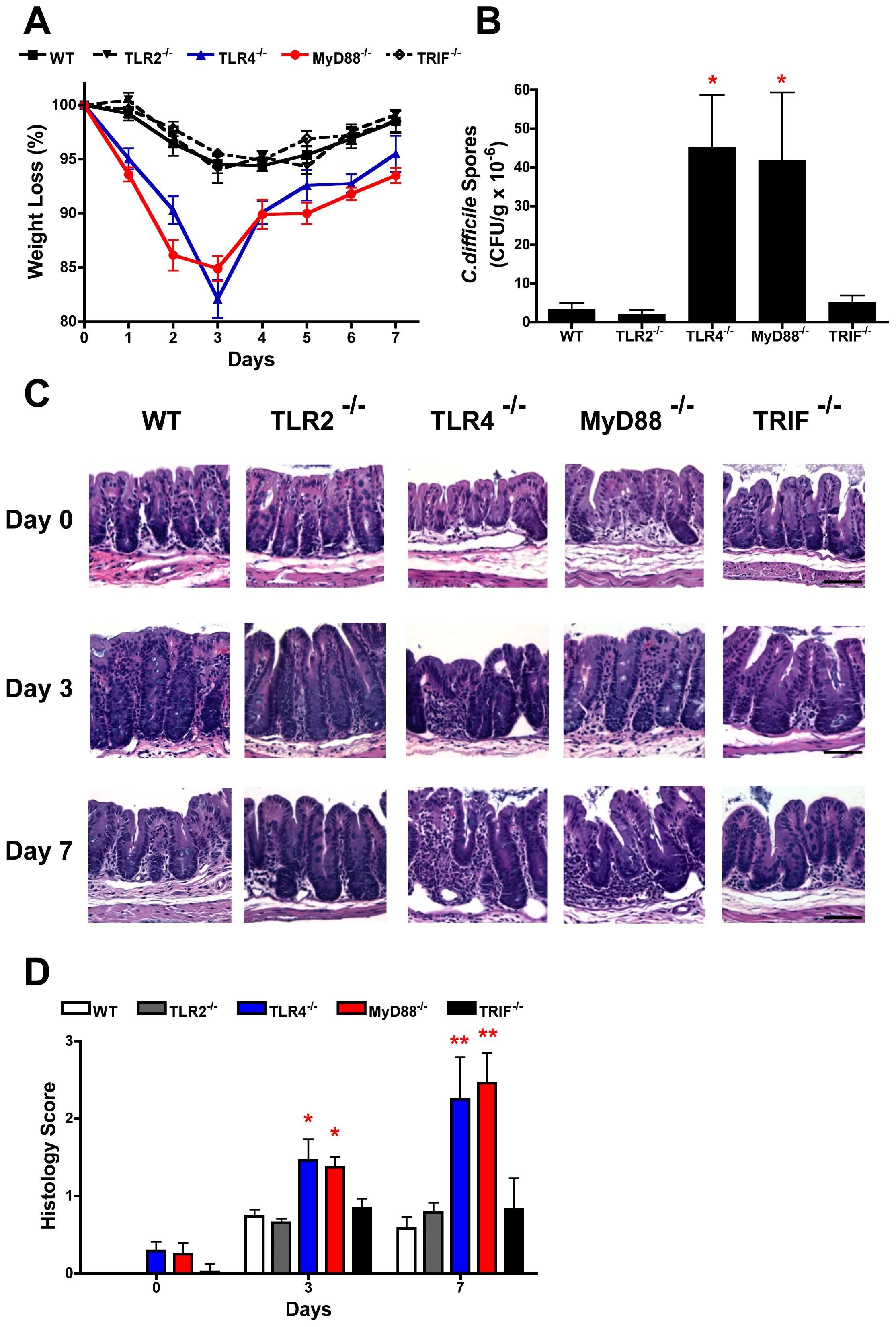 TLR4<sup>−/−</sup> and MyD88<sup>−/−</sup> mice show increased severity of infection with <i>C. difficile</i> infection.