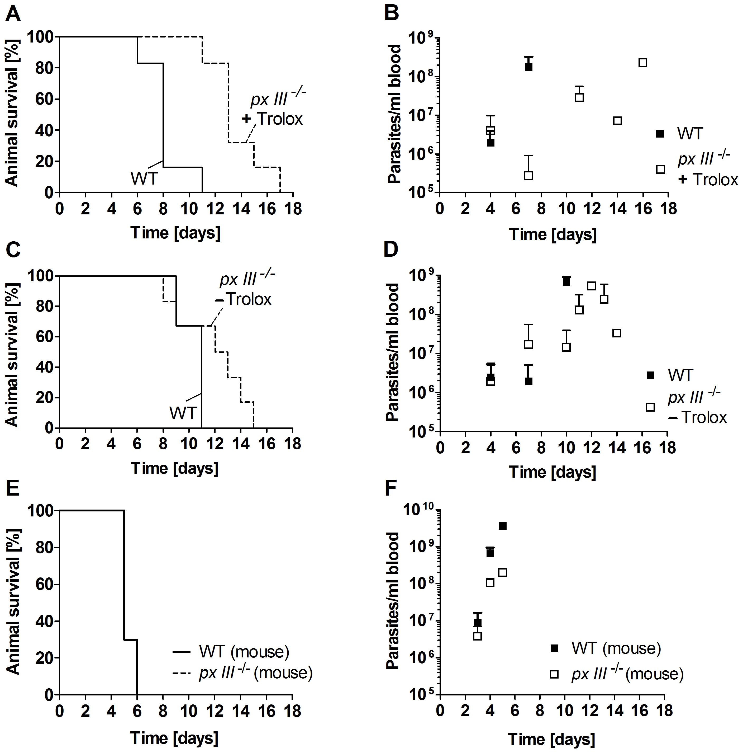 Infectivity of <i>px III</i><sup>−/−</sup> and WT <i>T. brucei</i>.