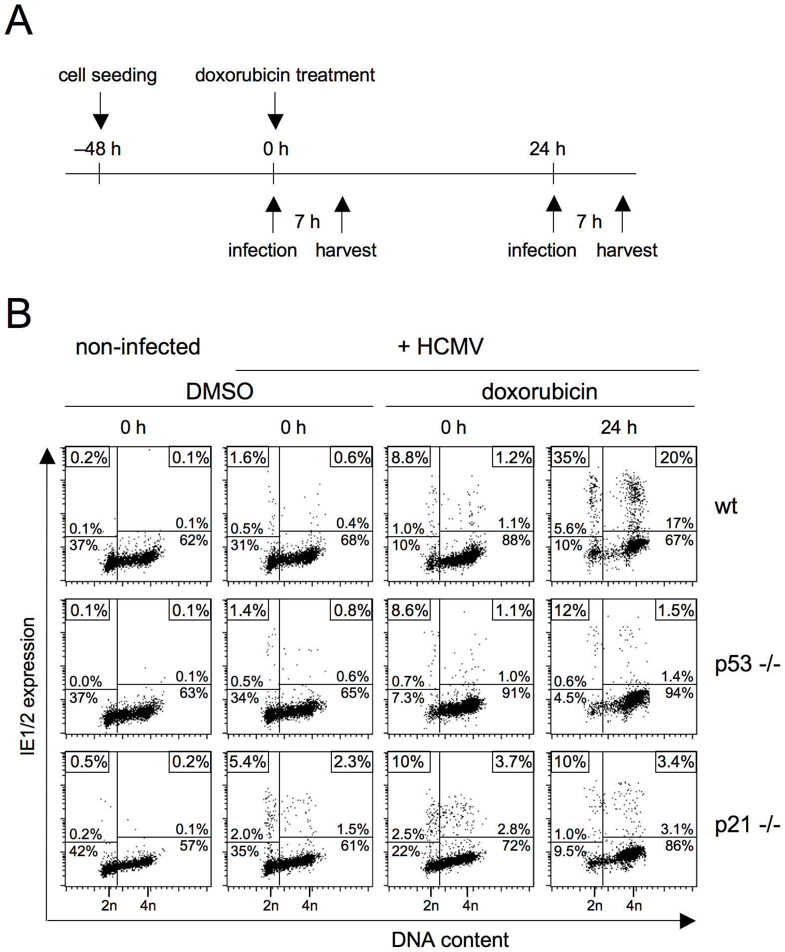 DNA damage-dependent rescue of MIE gene expression in S/G2 depends on the CDK inhibitor p21.