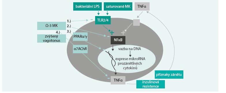 Modulace reaktivity imunitního systému působením ω-3 MK.
