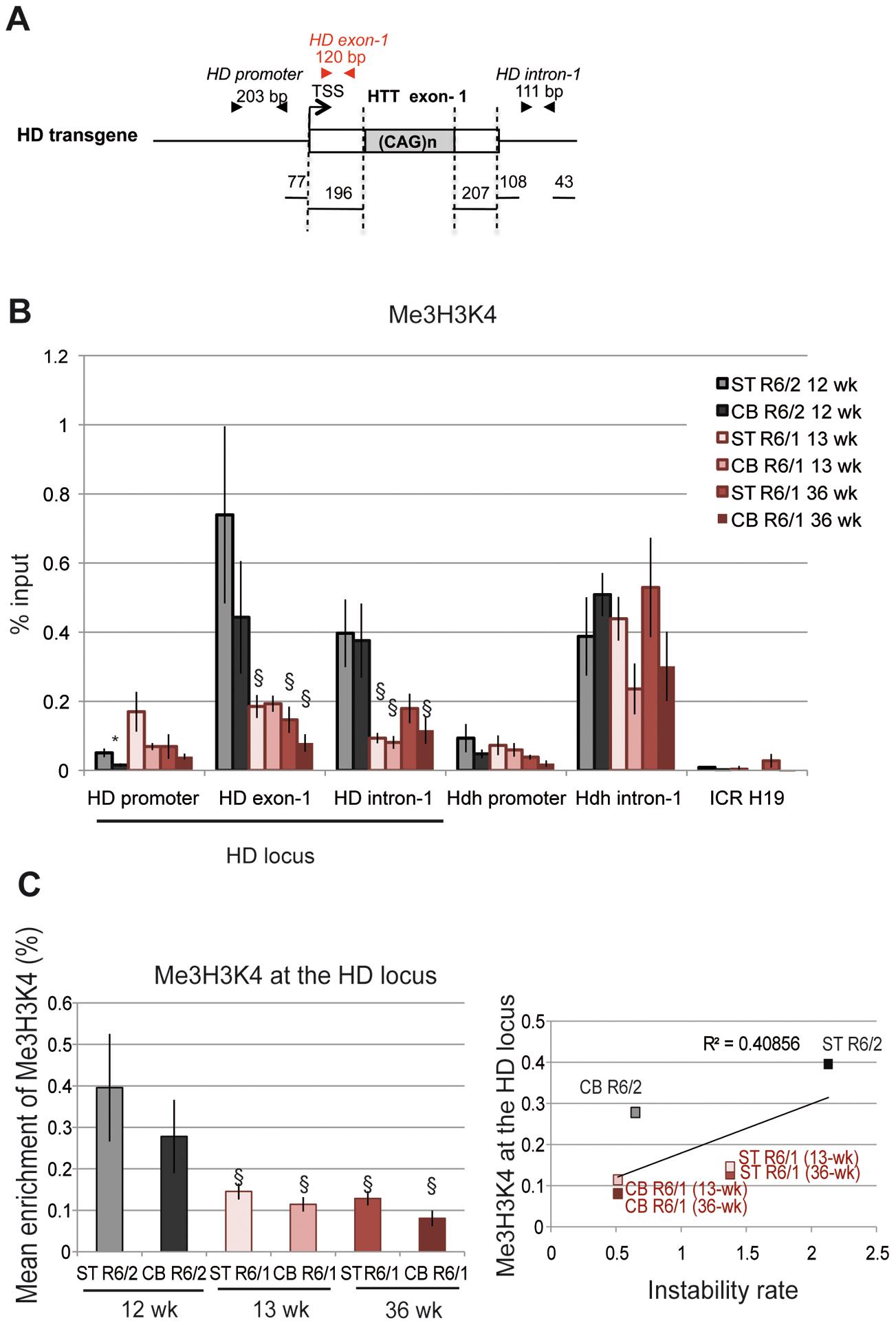 Me3H3K4 at the HD locus in R6/1 and R6/2 striatum and cerebellum.