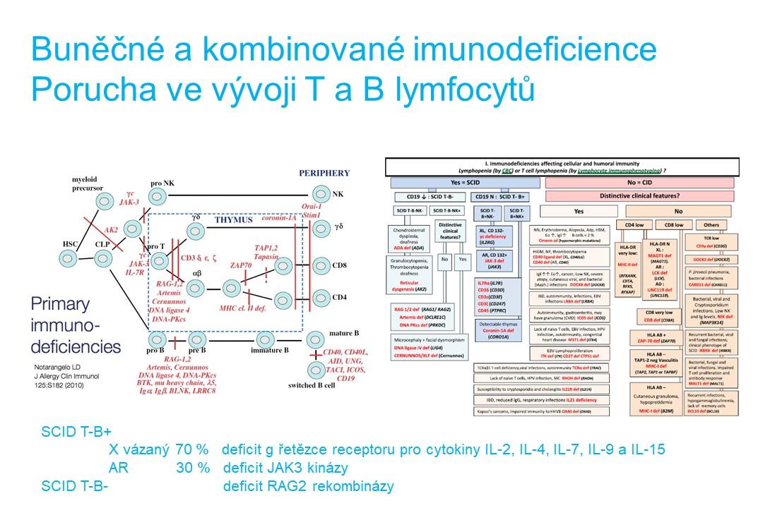 Imunodeficience - 17