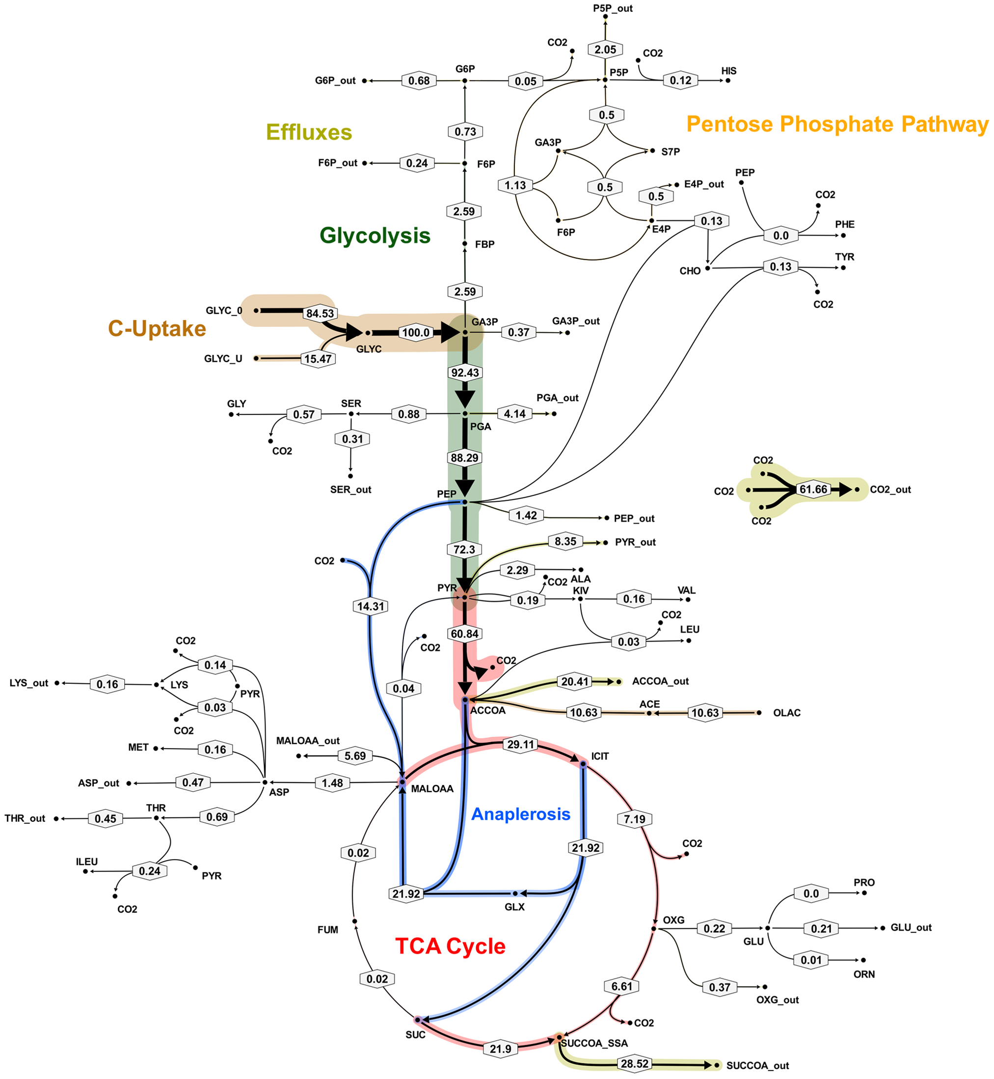 Metabolic flux map B for <i>M. tuberculosis</i> in glycerol limited continuous culture at slow growth rate (t<sub>d</sub>=69 h).